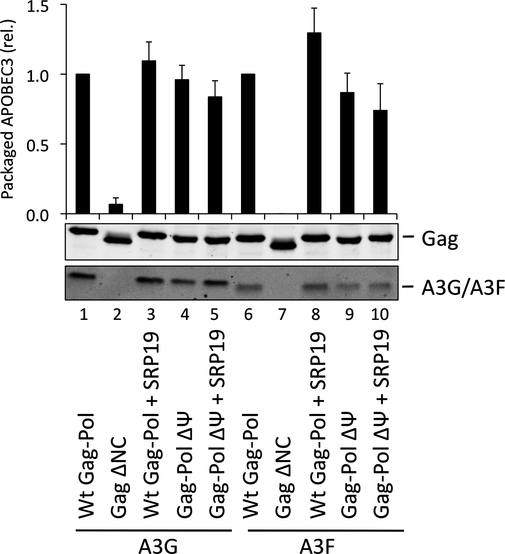 A3G and A3F are packaged into VLPs doubly depleted for genomic RNA and 7SL RNA.