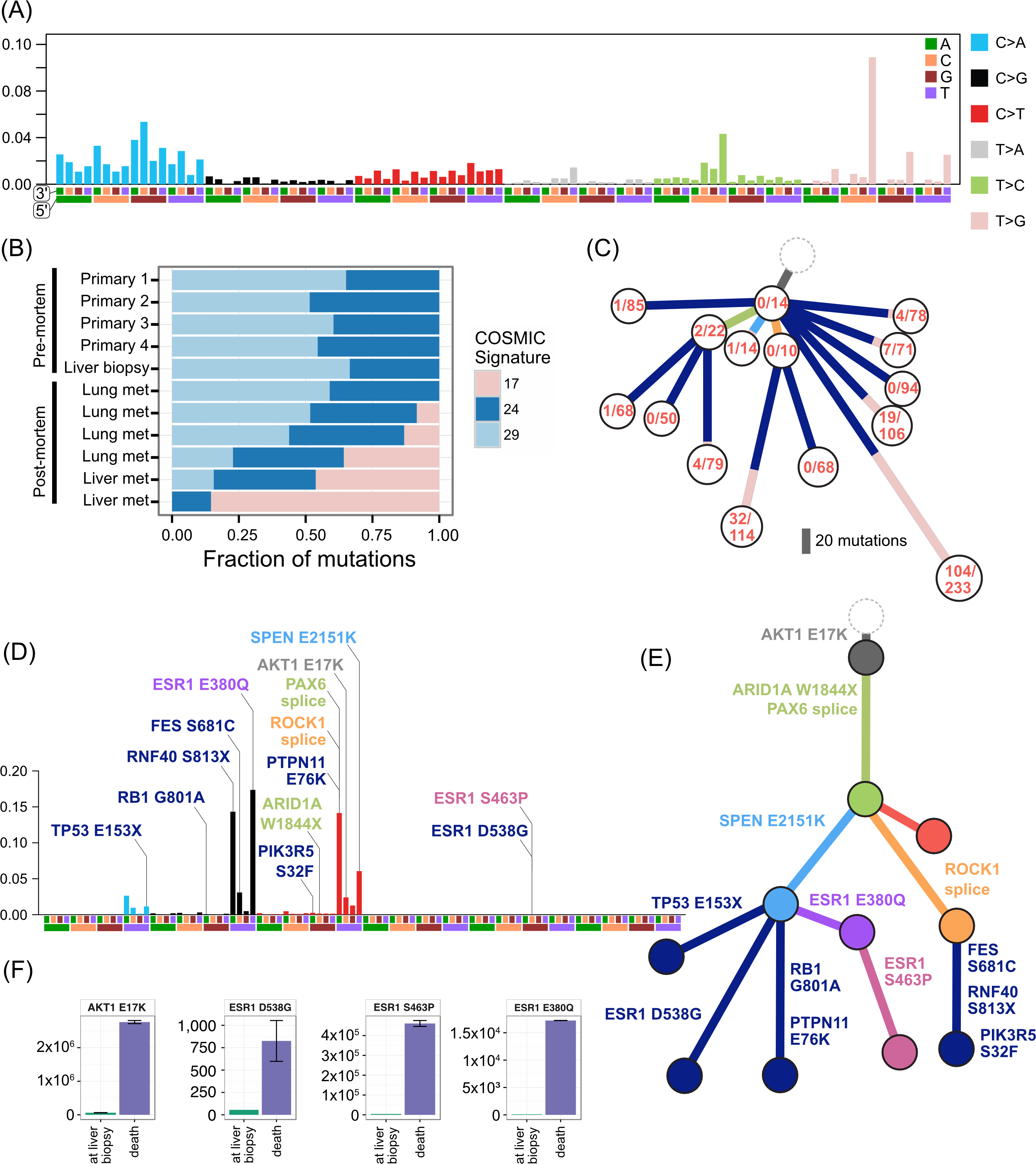 Mutational signatures in TN1 and ER2, and ctDNA assays in ER2.