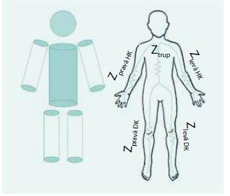 Náhrada těla měřeného pacienta soustavou válcových vodičů pro převod impedančních dat na objemy extra/intracelulárního kompartmentu