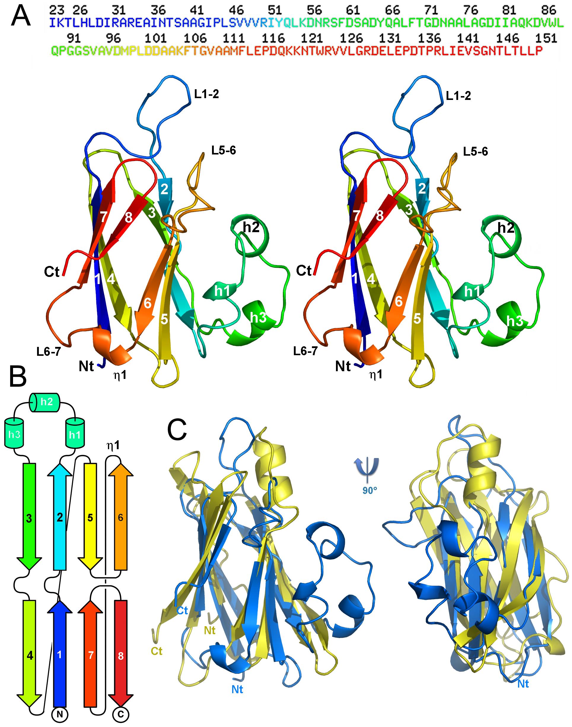 Structure of the enteroaggregative <i>E. coli</i> T6SS TssJ subunit.