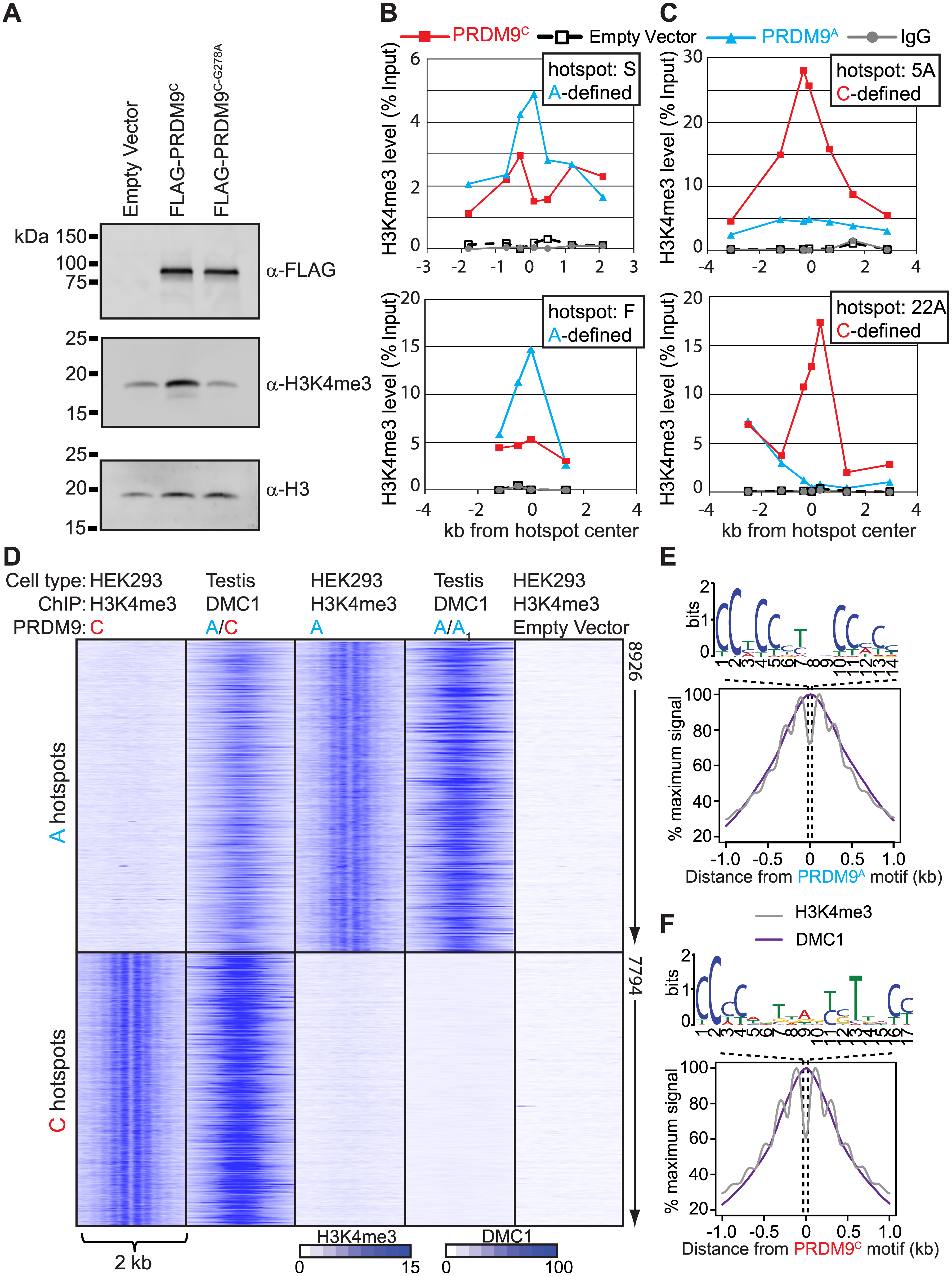 Expression of <i>PRDM9</i> in HEK293 cells recapitulates allele-specific hotspot activation in vivo.
