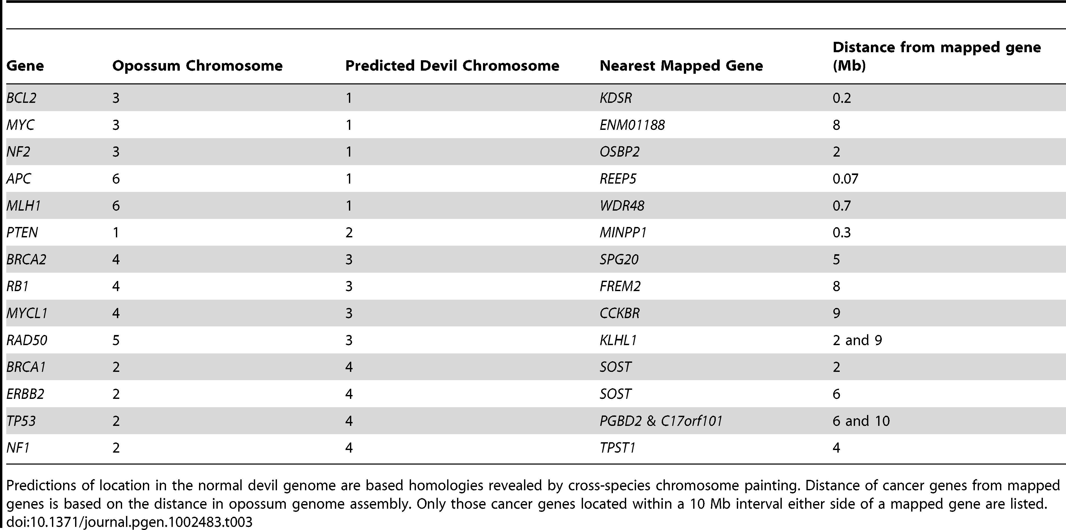 Predicted location of common tumour suppressor genes and oncogenes in the devil genome.