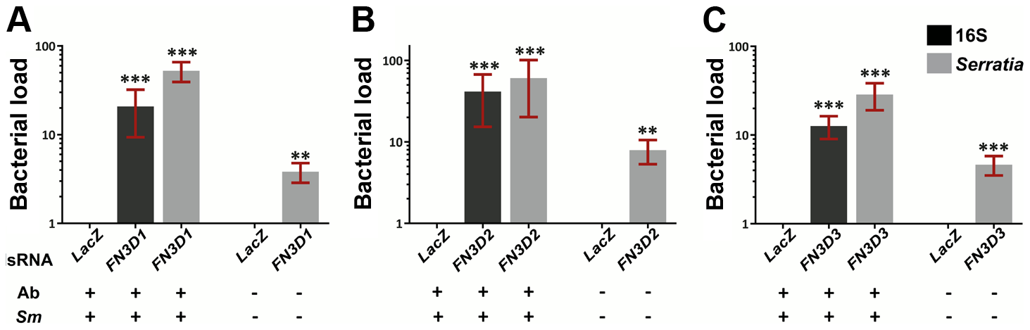 Silencing of <i>FN3D1–3</i> increases <i>Serratia</i> levels in orally infected mosquitoes or mosquitoes retaining their natural gut microbiota.