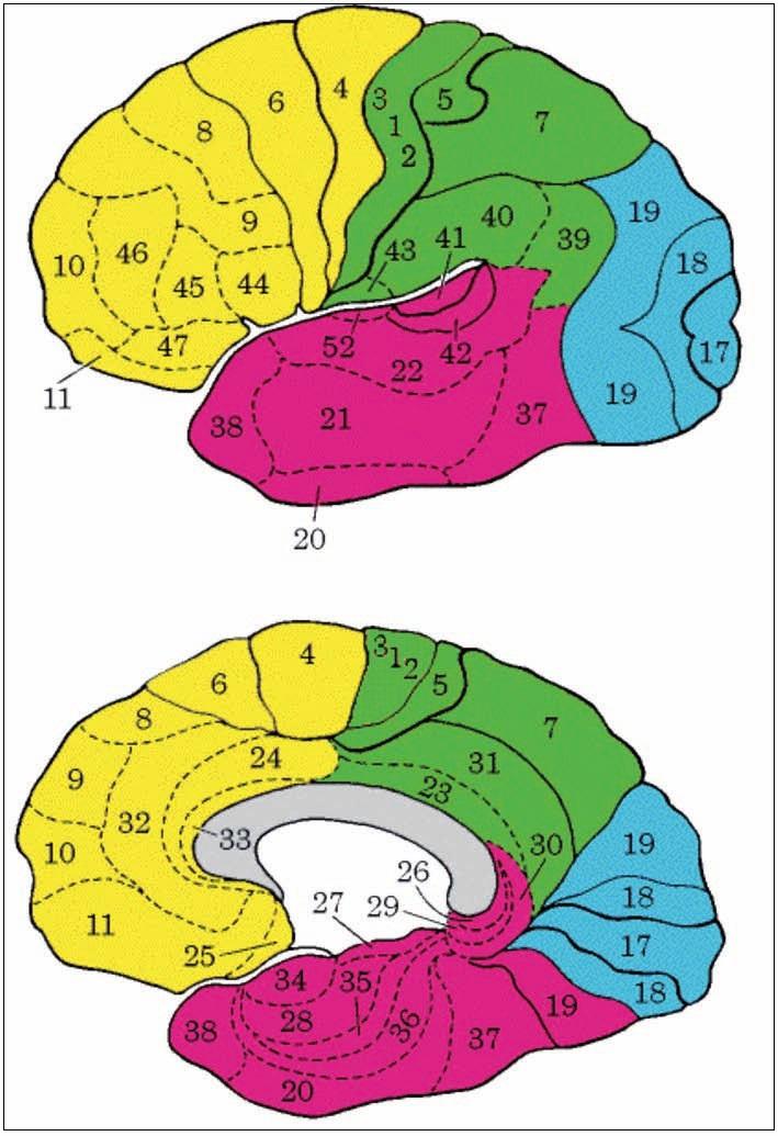 Brodmanova cytoarchitektonická mapa korových polí lidského mozku