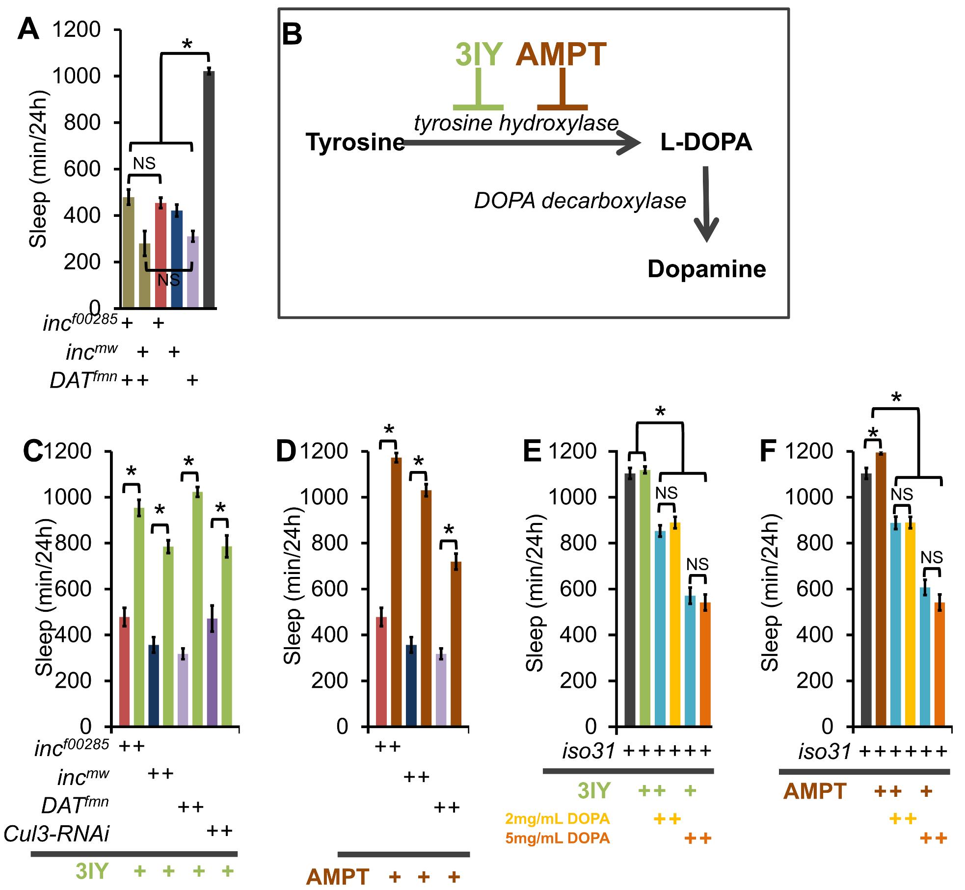 <i>inc</i> effects on sleep require a dopamine sleep-regulatory pathway.