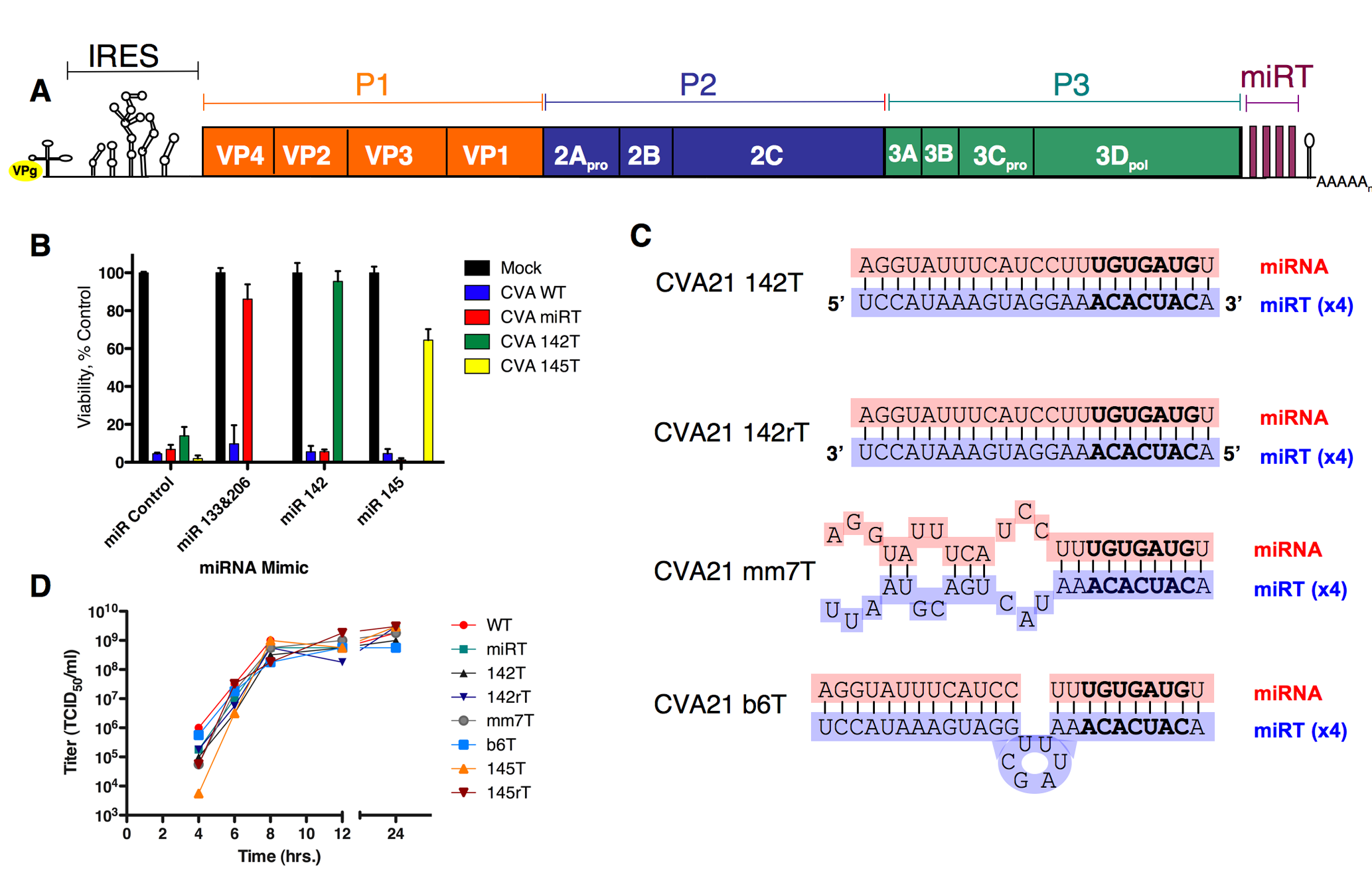 Schematics, growth kinetics, and permissivity of recombinant CVA21 in HeLa cells.