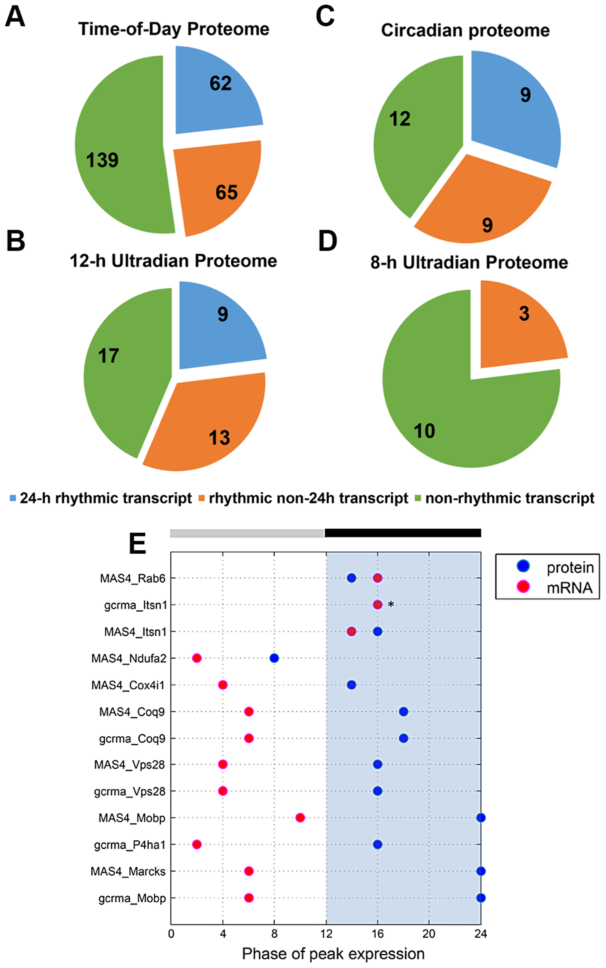 Comparative analysis of the murine SCN transcriptome and proteome.