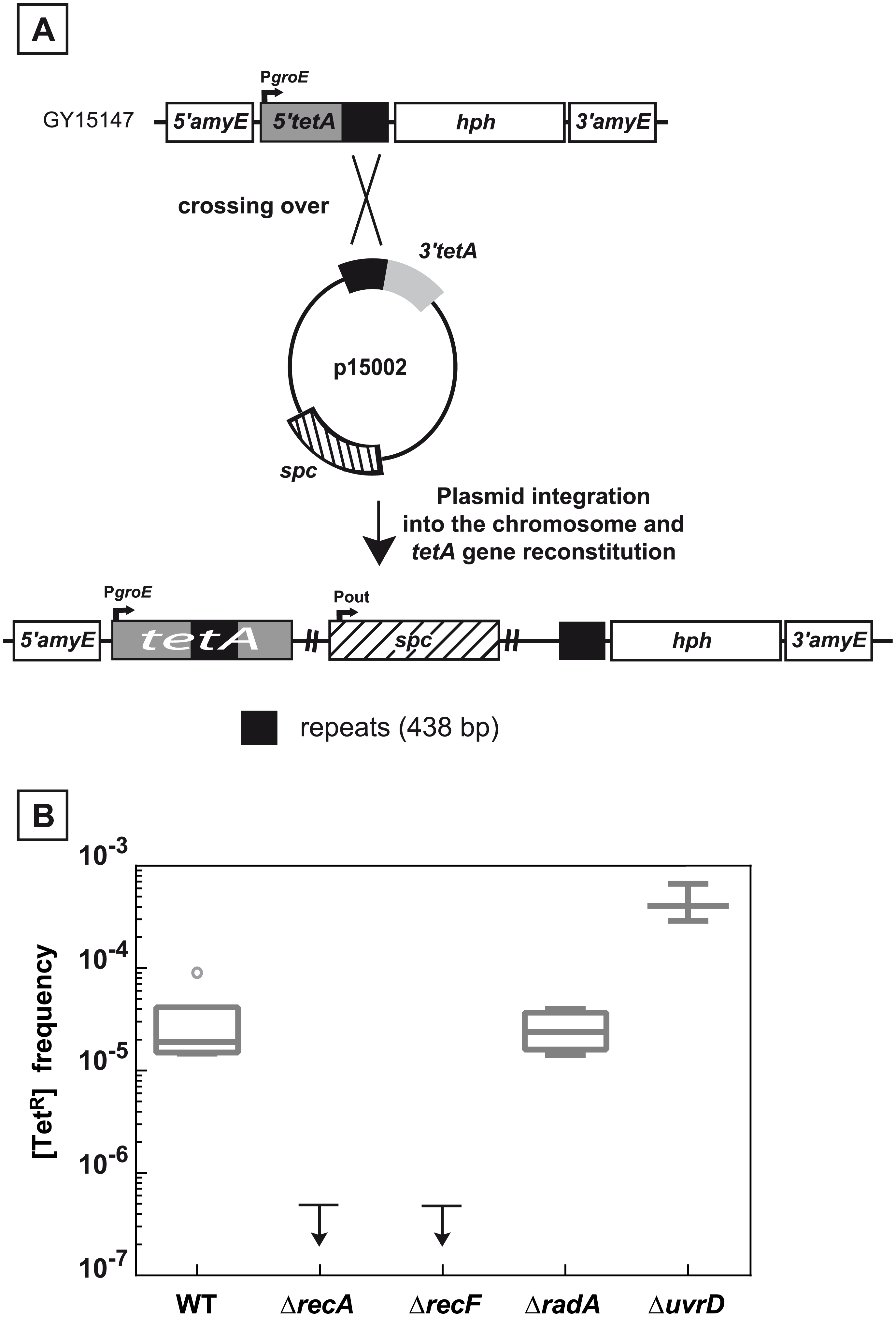 Recombination between chromosomal and plasmid DNA is RecA- and RecF-dependent.
