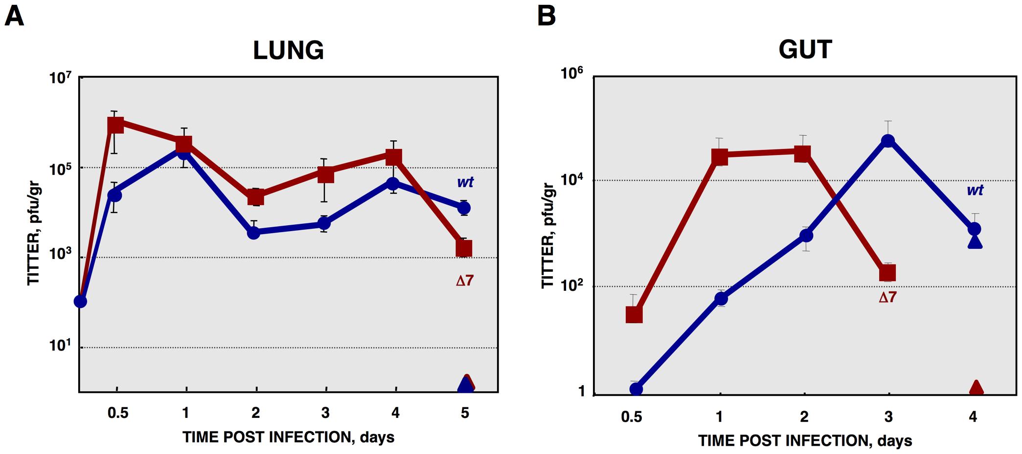 <i>In vivo</i> growth kinetics of rTGEV-Δ7 virus.