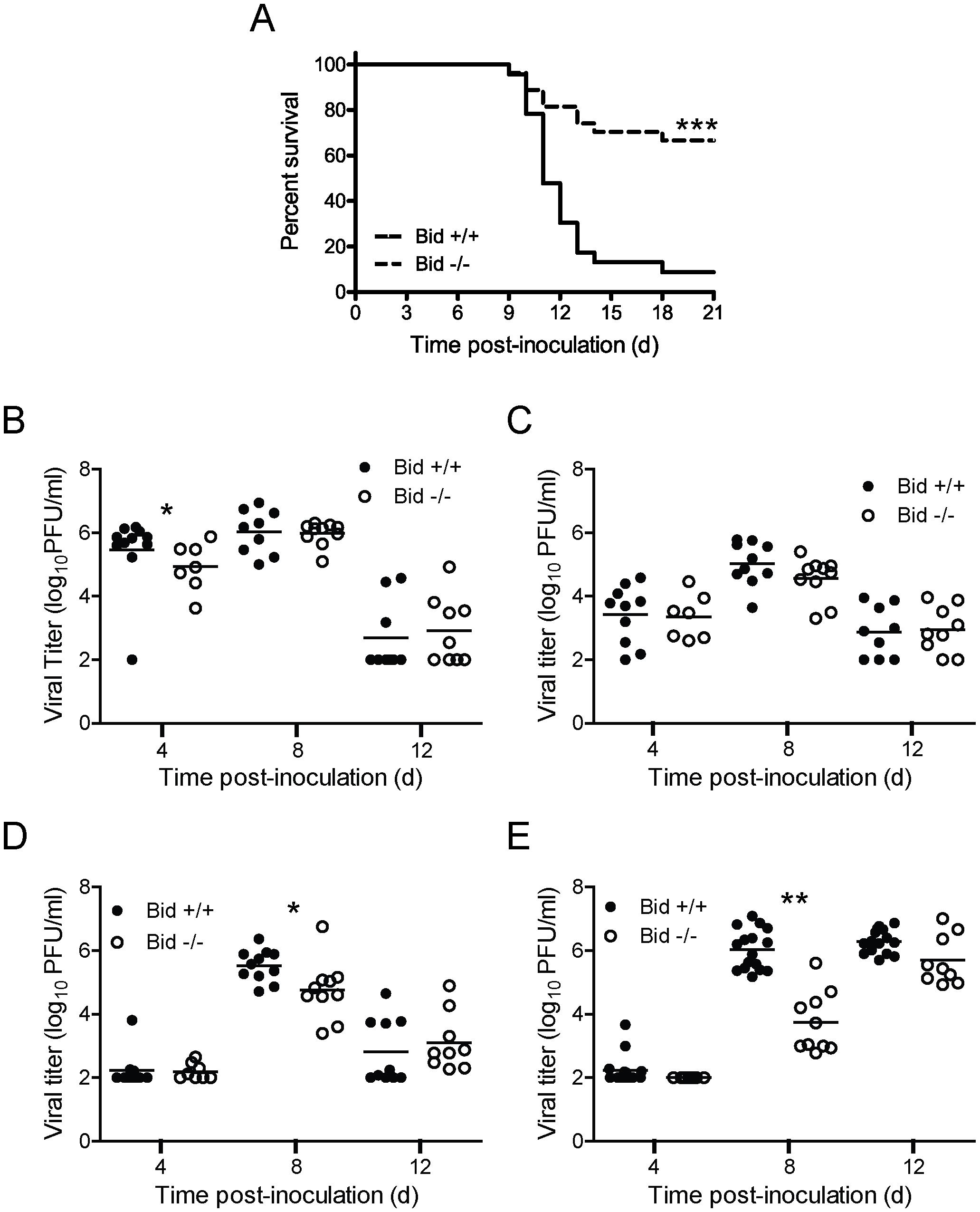 Bid modulates reovirus replication and pathogenesis following PO inoculation.