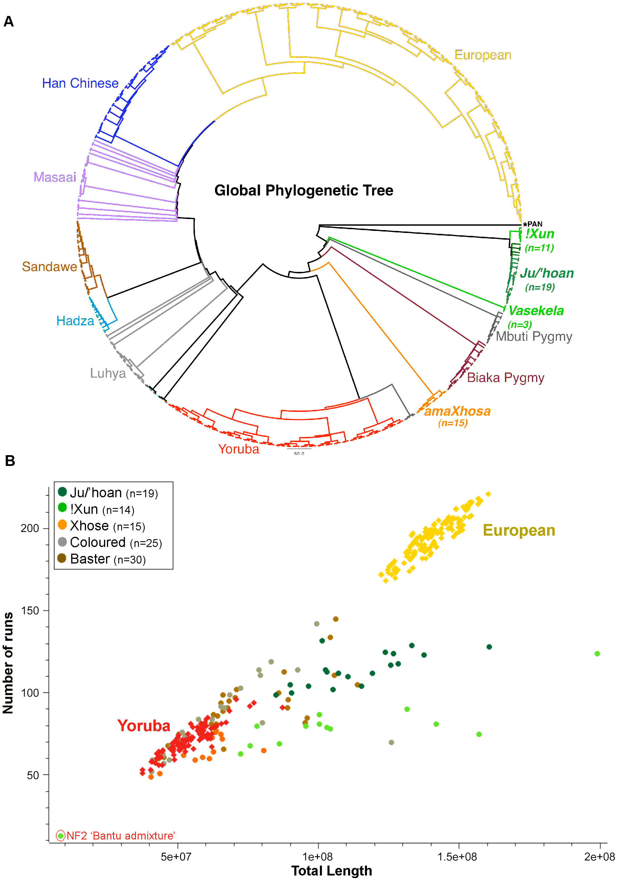 Relatedness and demographic history of the Ju/'hoan to global populations defines early divergence and genomic impact of forager existence.