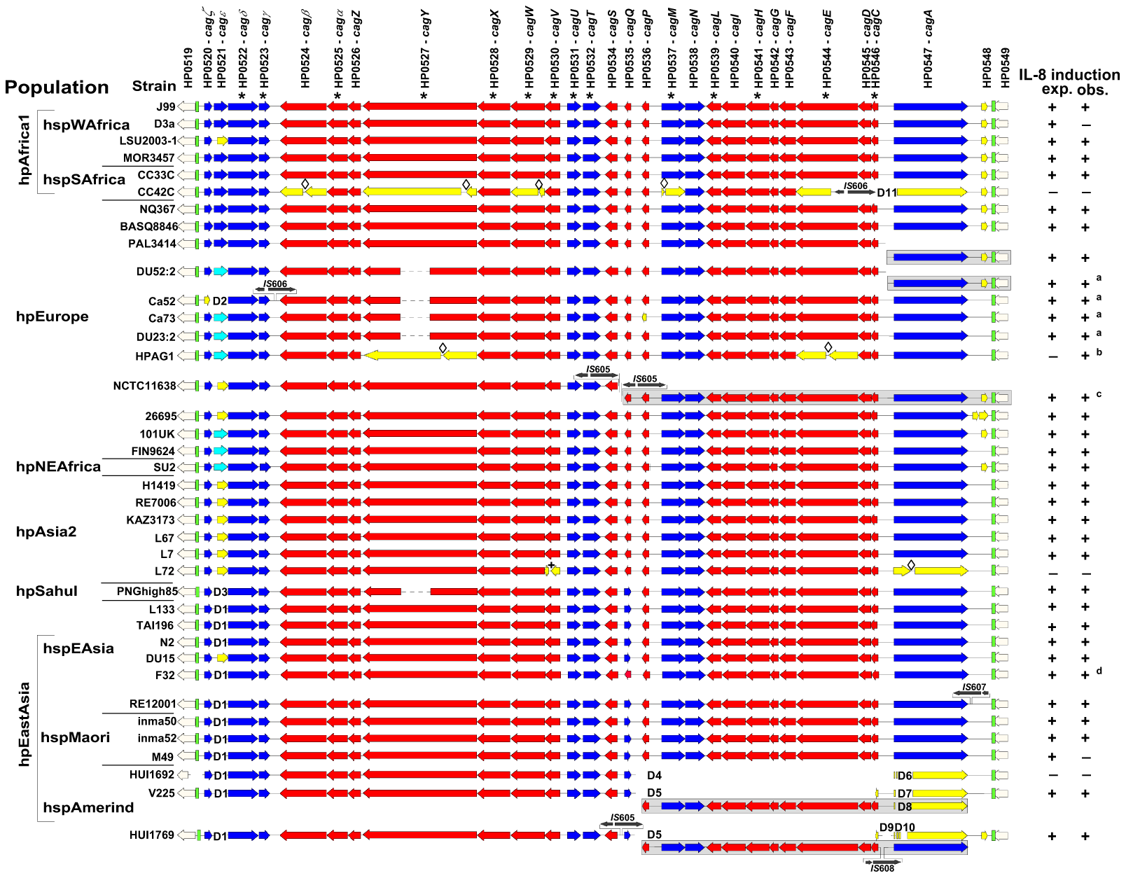 Conservation of the <i>cag</i>PAI genetic organization across <i>H. pylori</i> biogeographic populations.