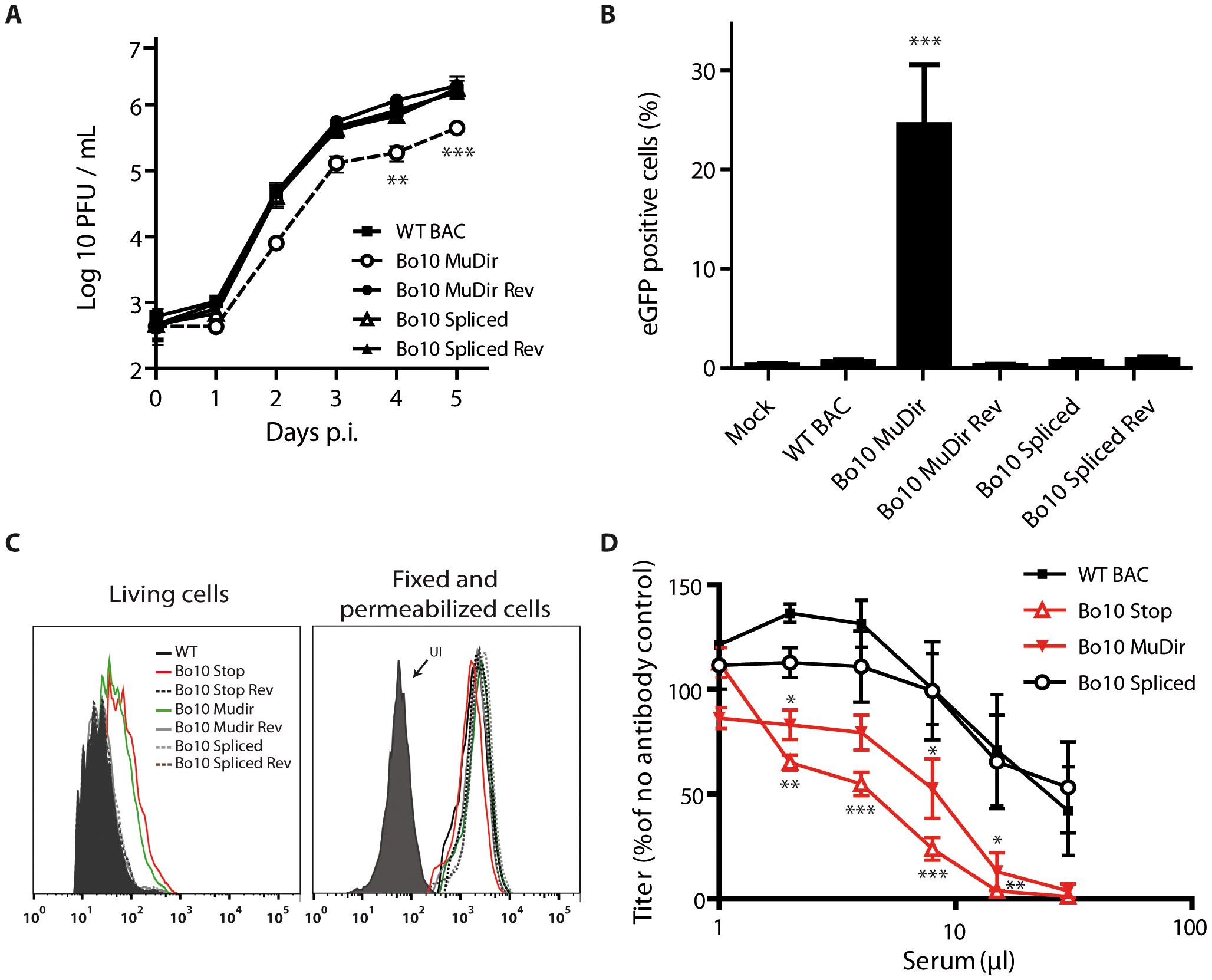 Bo10 mRNA splicing determines phenotype of BoHV-4 virions.