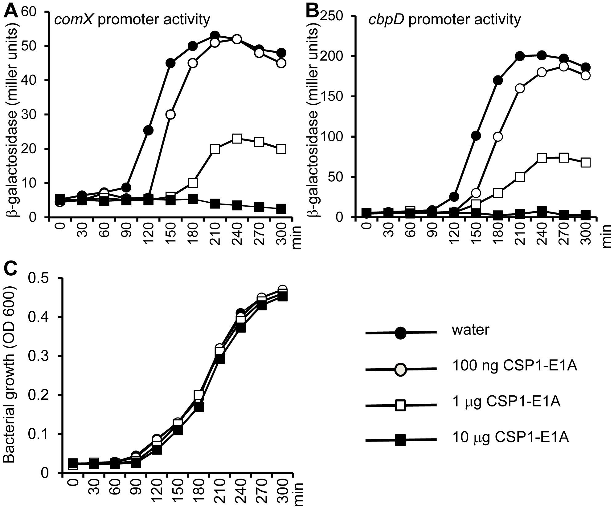 CSP1-E1A delays and inhibits the spontaneous development of competence in <i>S. pneumoniae</i> in a concentration-dependent manner.
