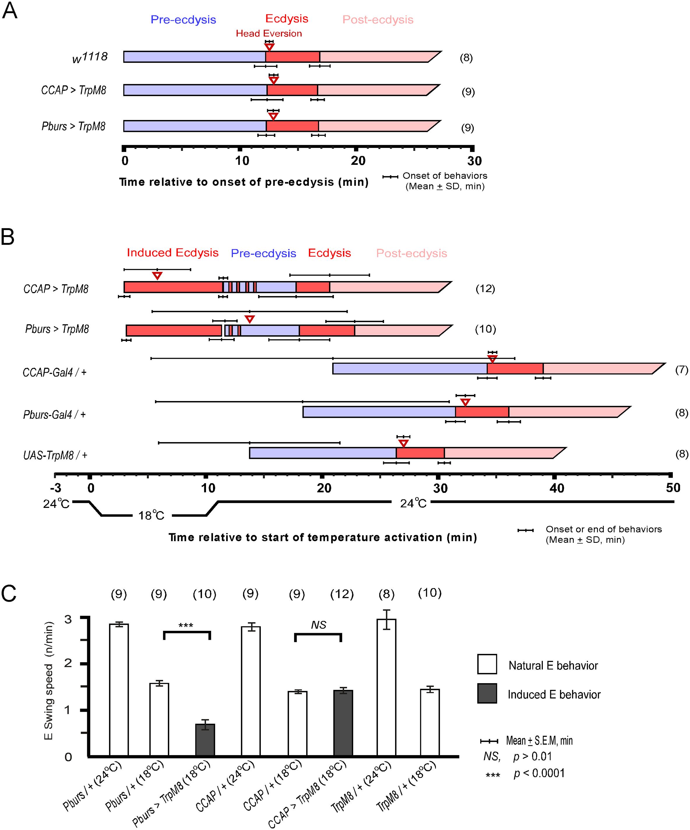 Activation of CCAP and CAMB neurons initiates ecdysis behavior.