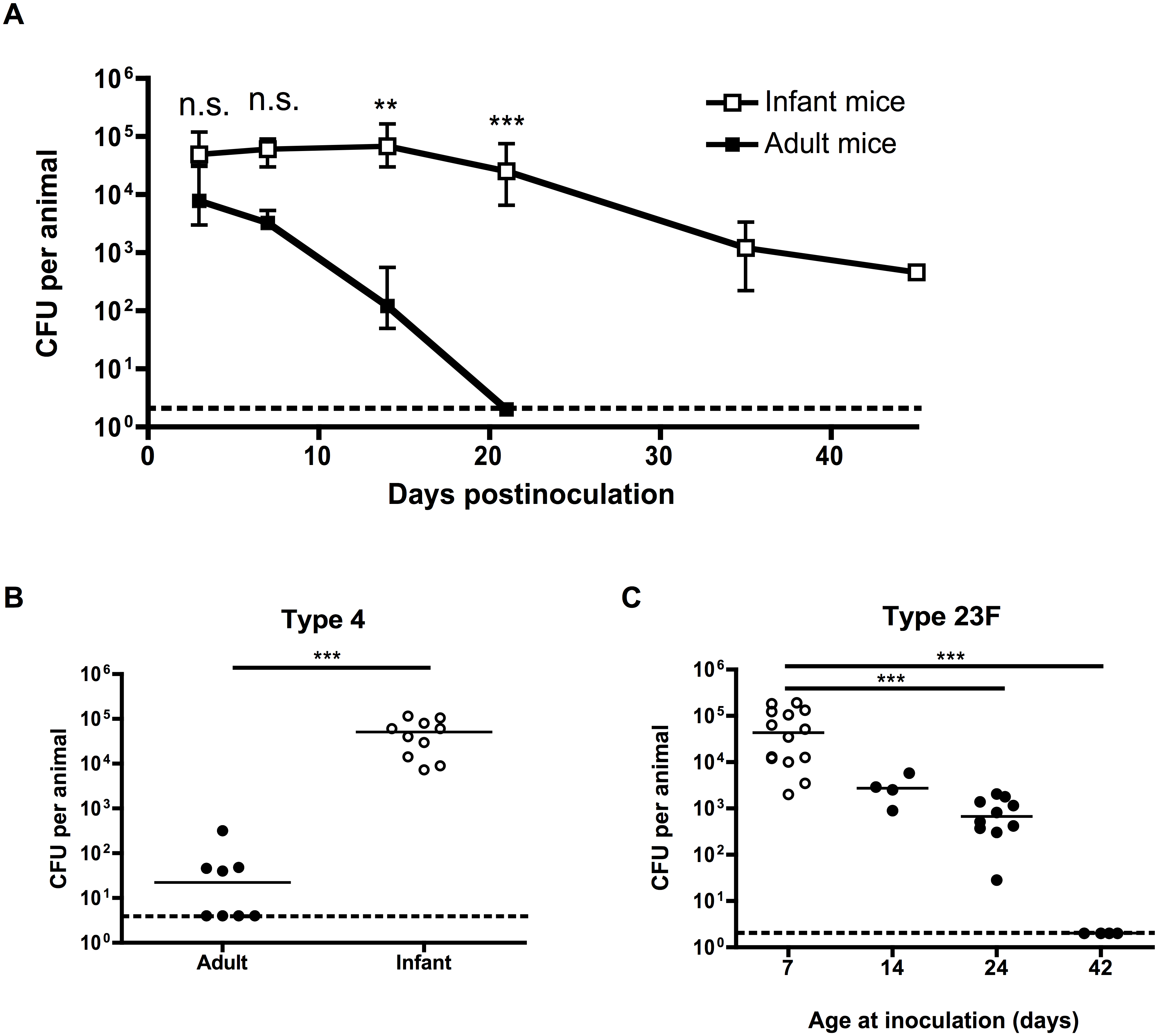 Pneumococcal carriage is prolonged in infant mice.