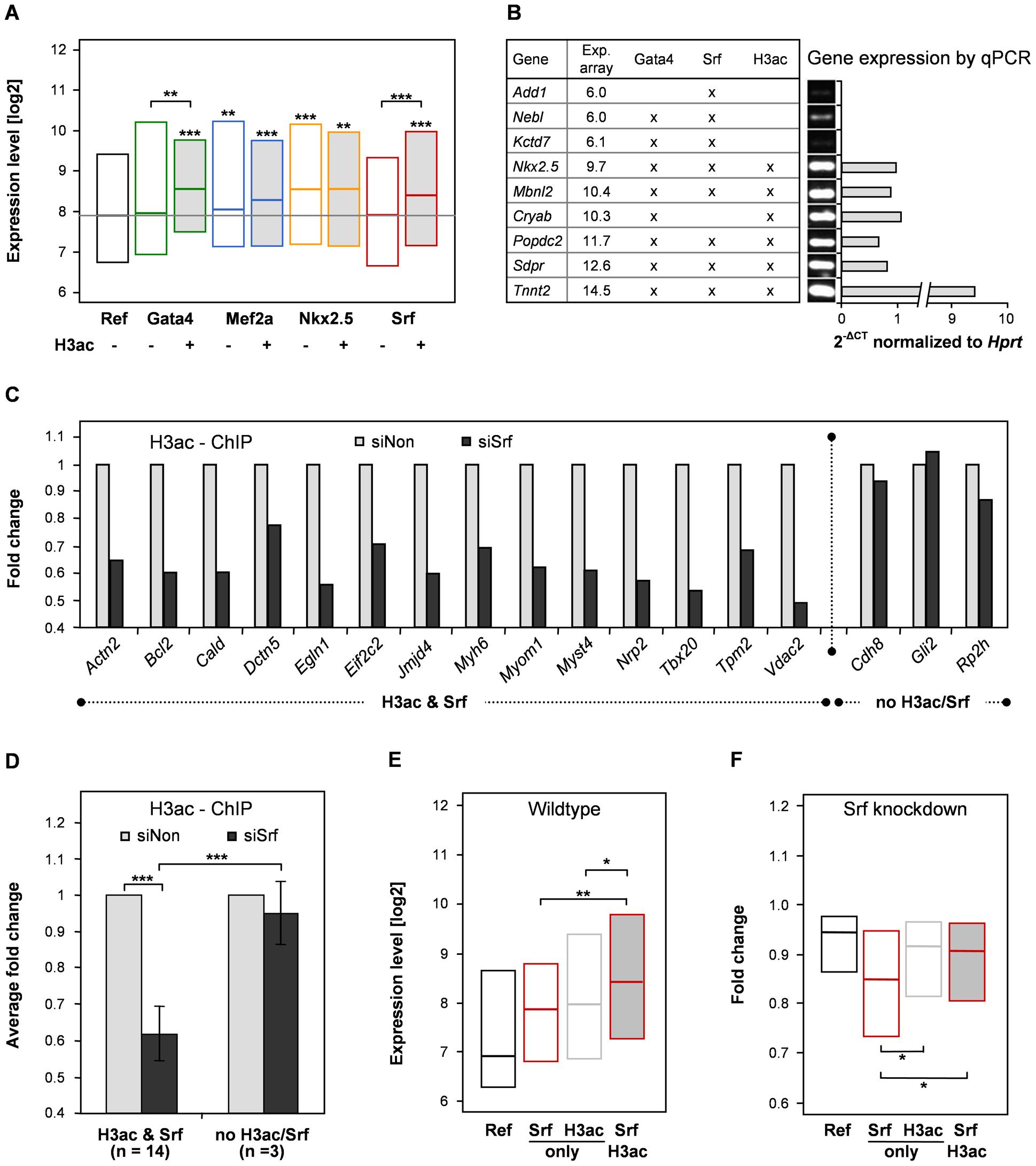 Histone 3 acetylation correlates with target gene expression of Srf and Gata4.