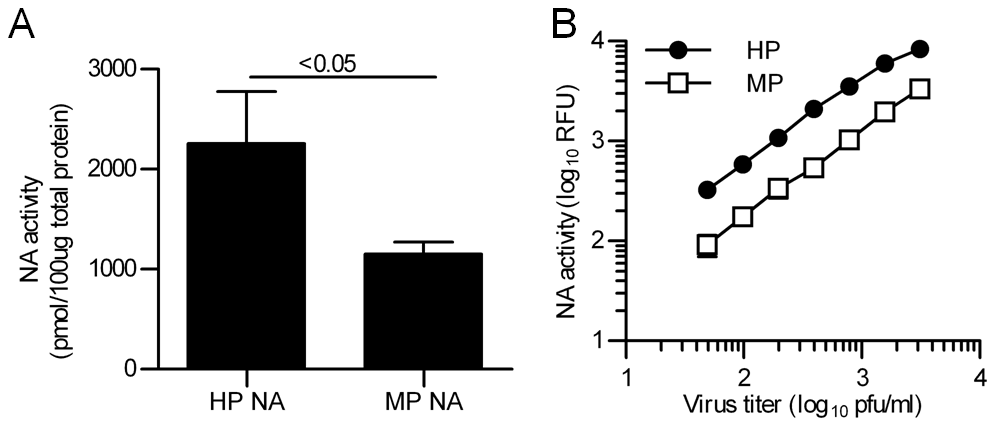 Enzymatic activities of the NA proteins from MP and HP influenza viruses.