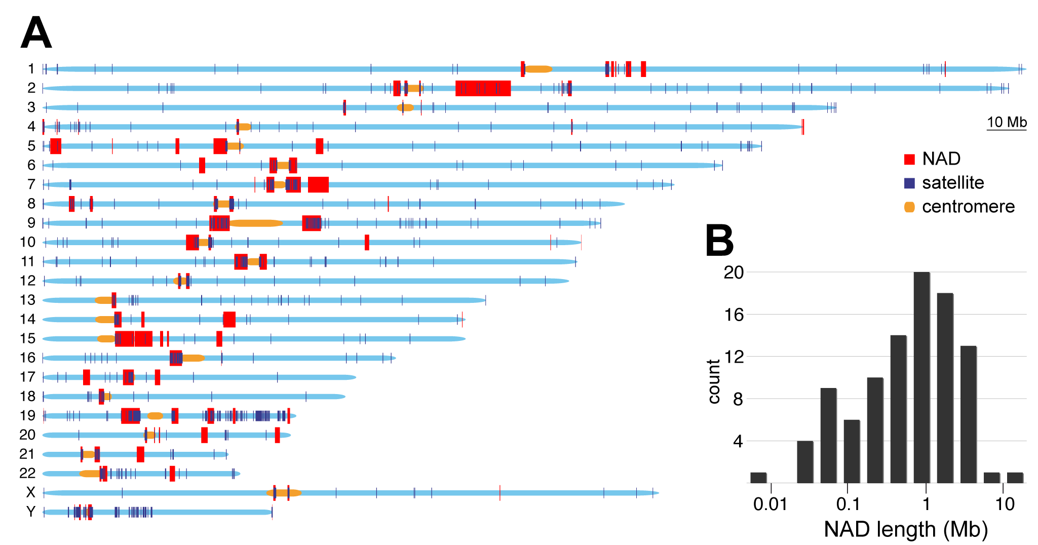 Genomic and size distribution of NADs.