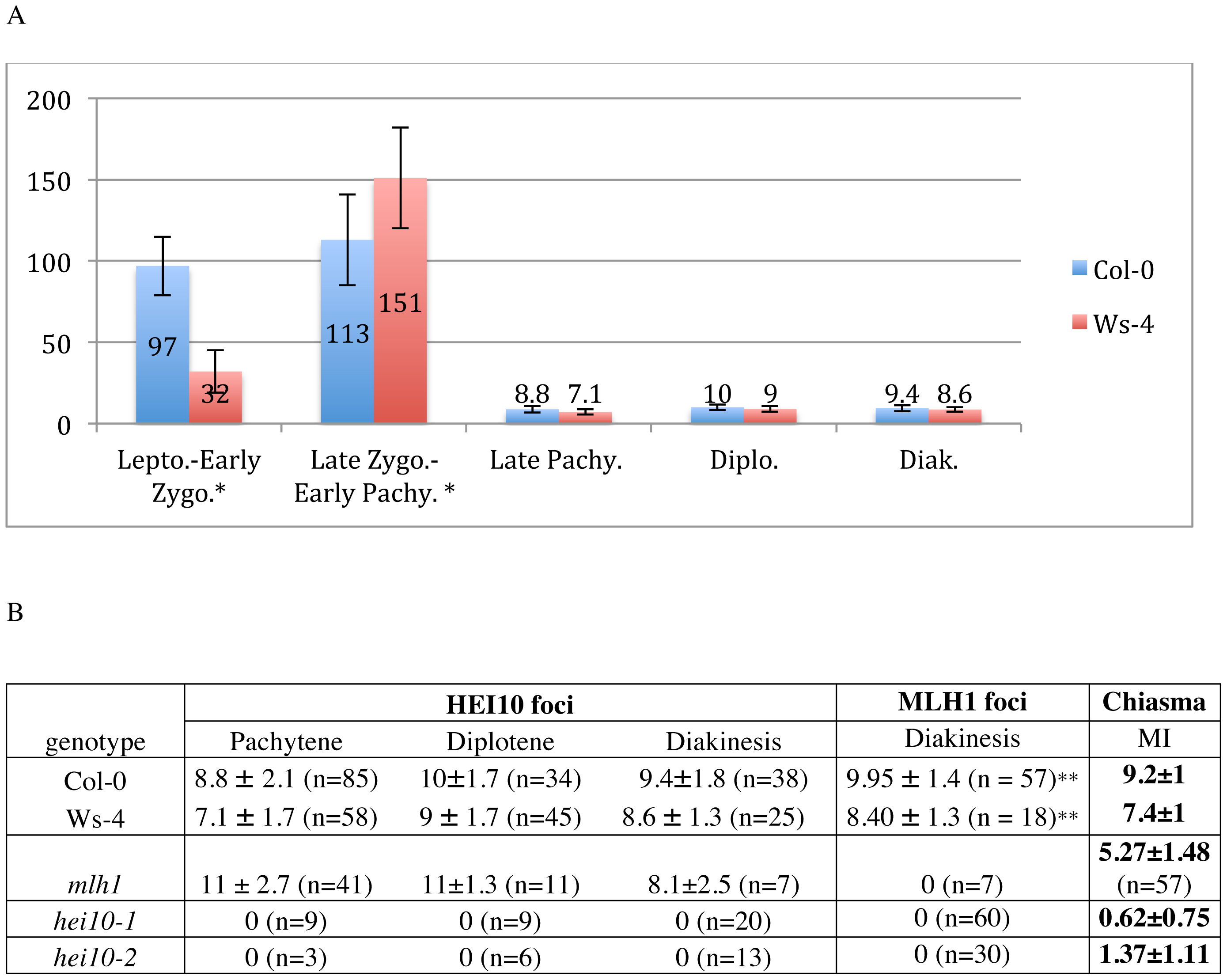 Quantification of HEI10 foci during meiotic prophase.