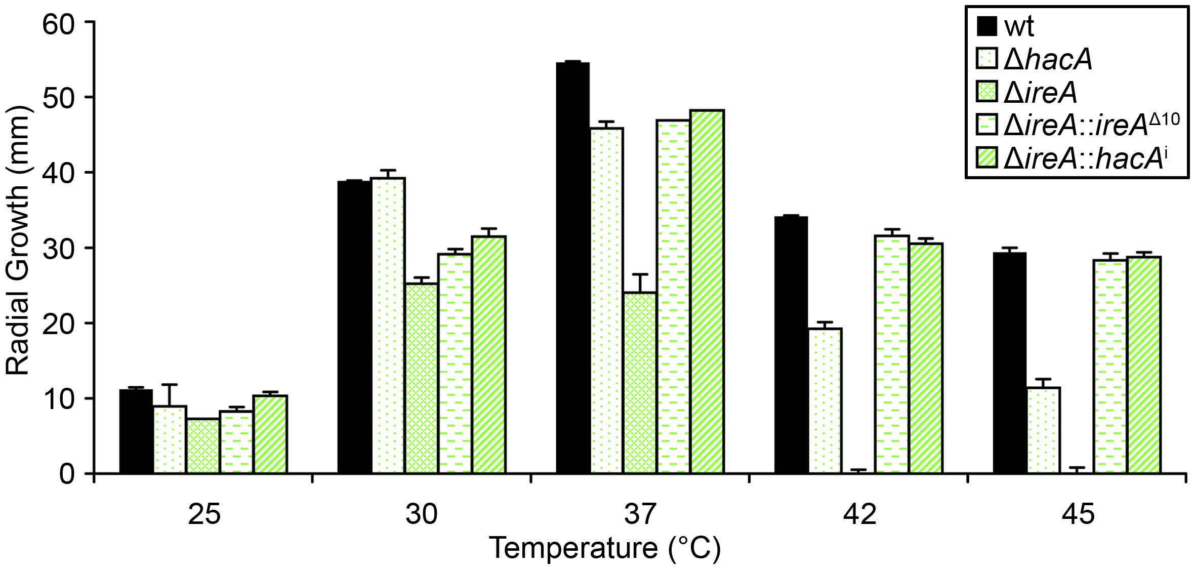 IreA contributes to thermotolerant growth.