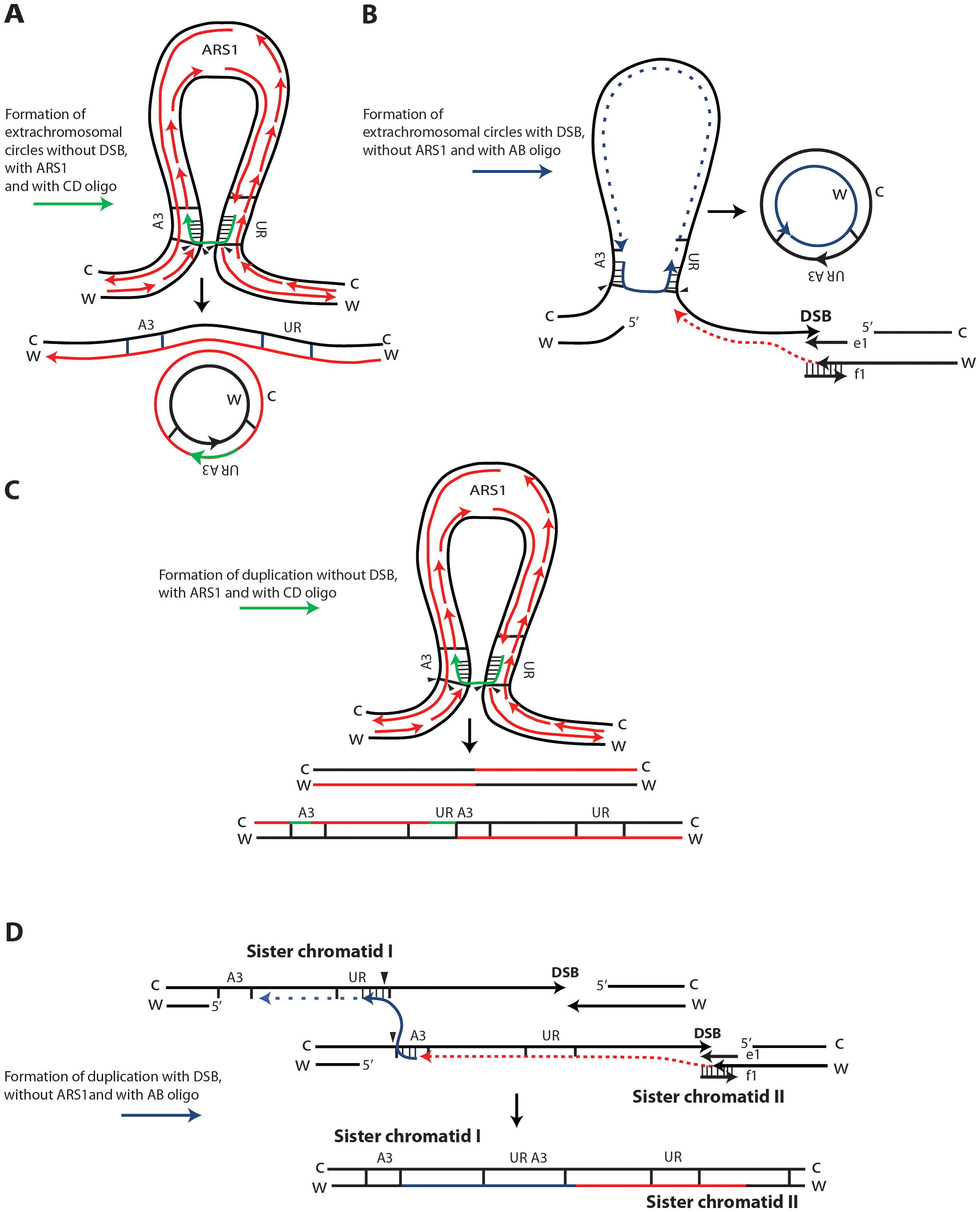 Possible SFDA mechanisms.