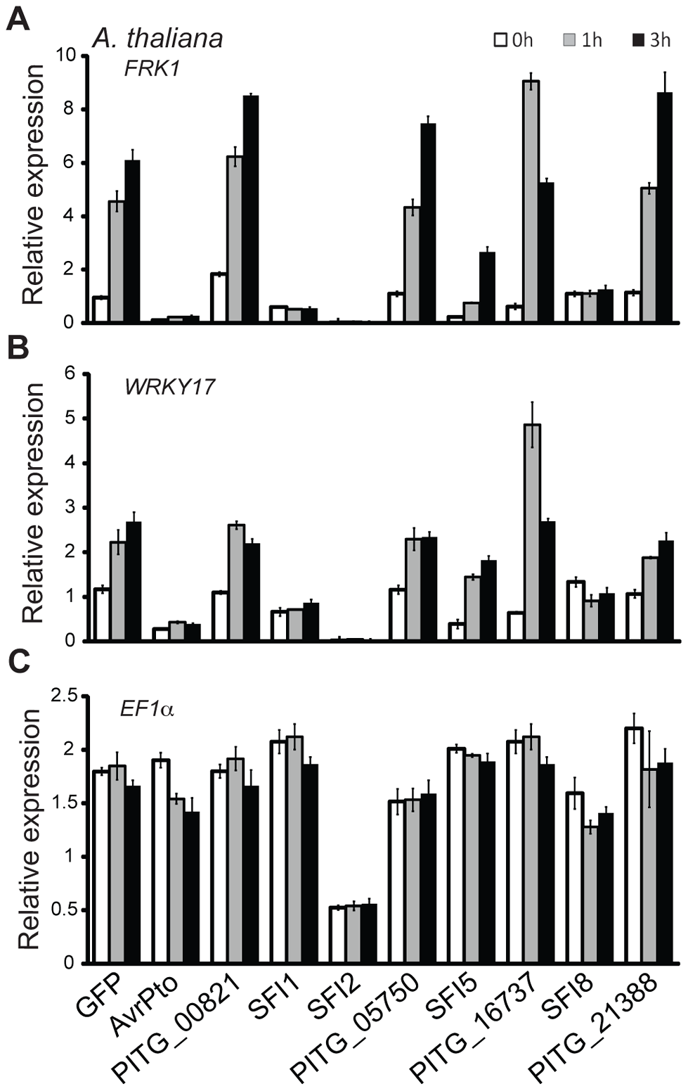 Transcriptional profiling of MAMP-inducible genes in <i>A. thaliana</i> protoplasts transfected with SFI effector constructs.
