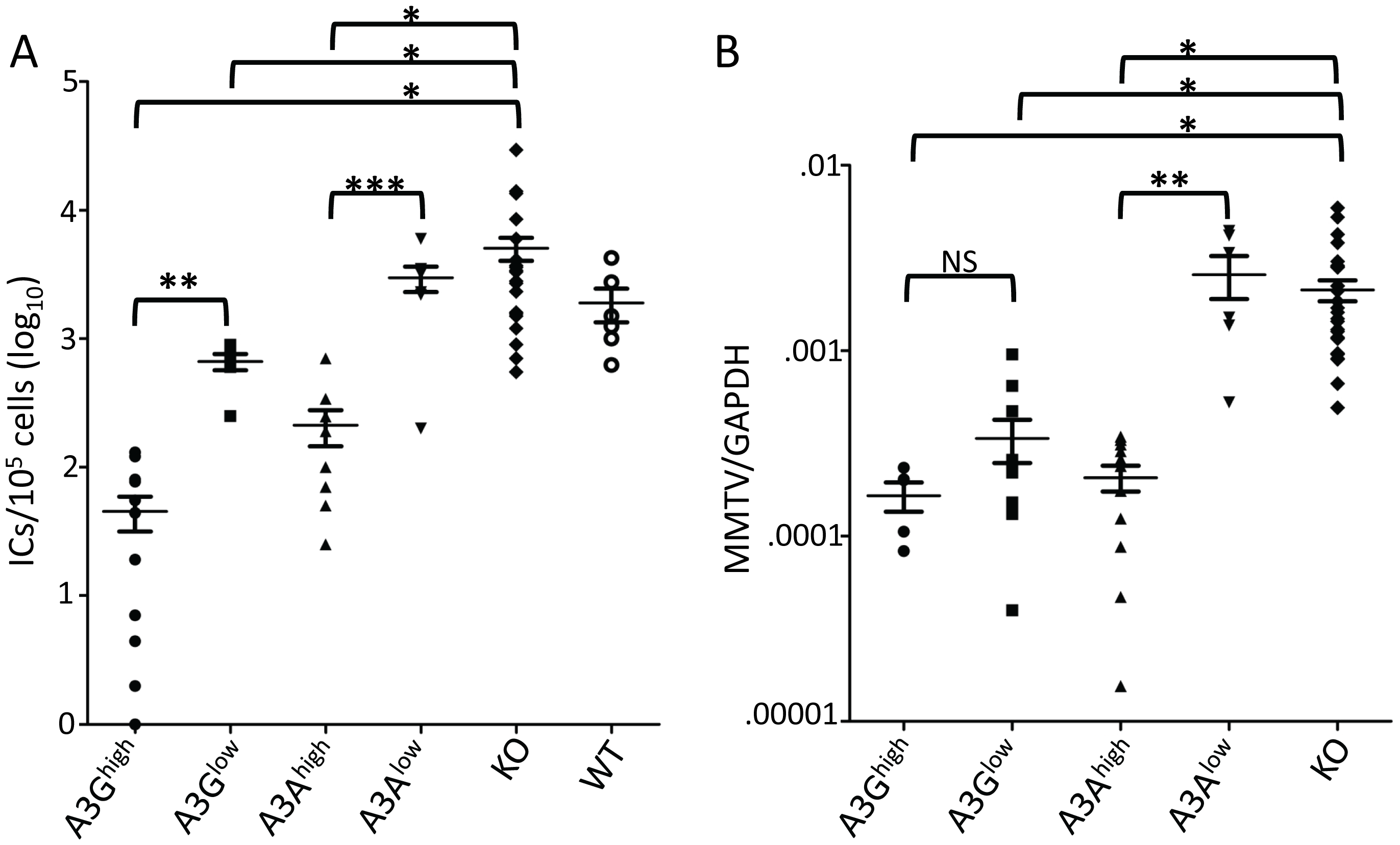 A3A and A3G restrict murine retrovirus infection <i>in vivo</i>.