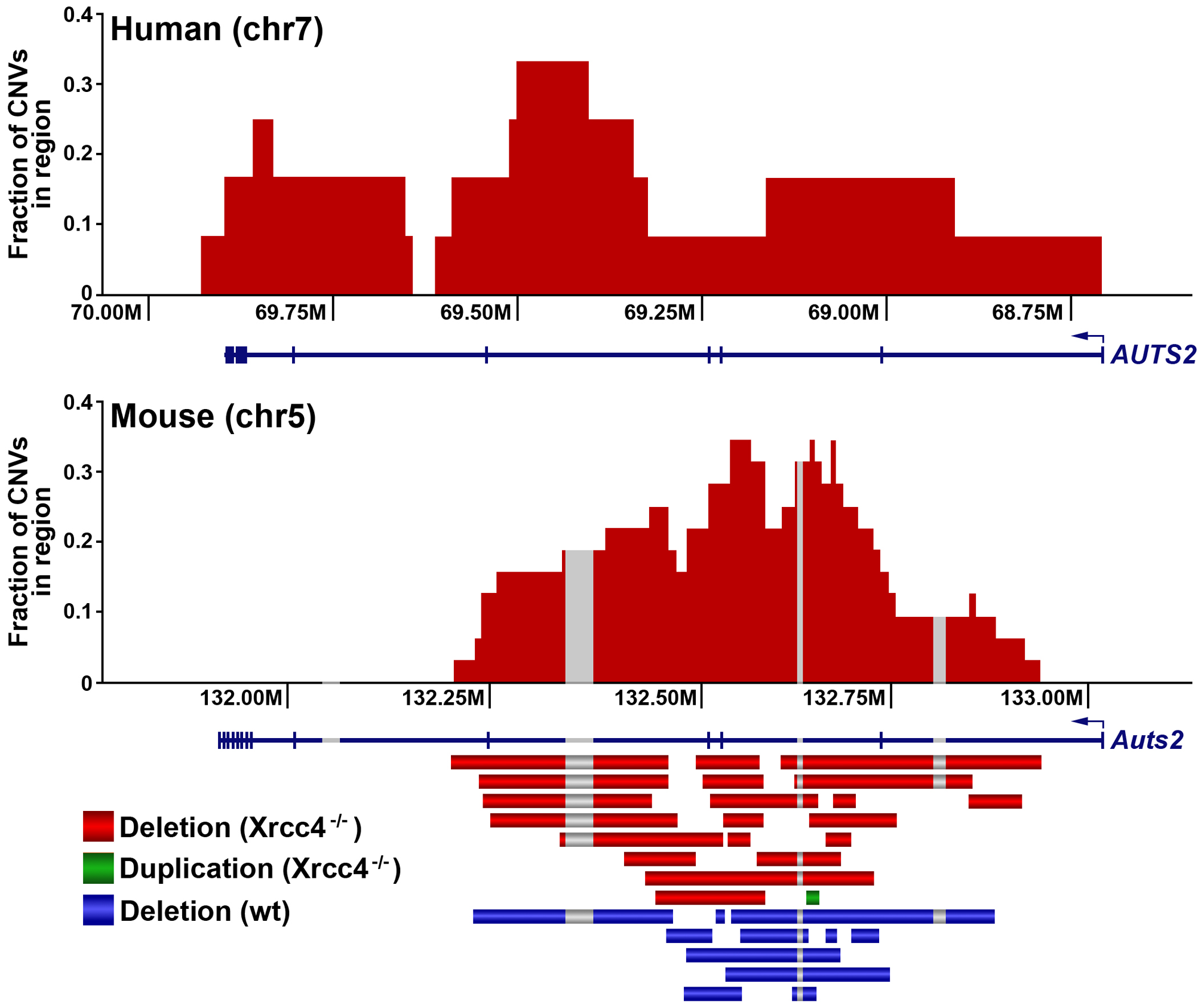 A conserved CNV hotspot in mouse and human cells.