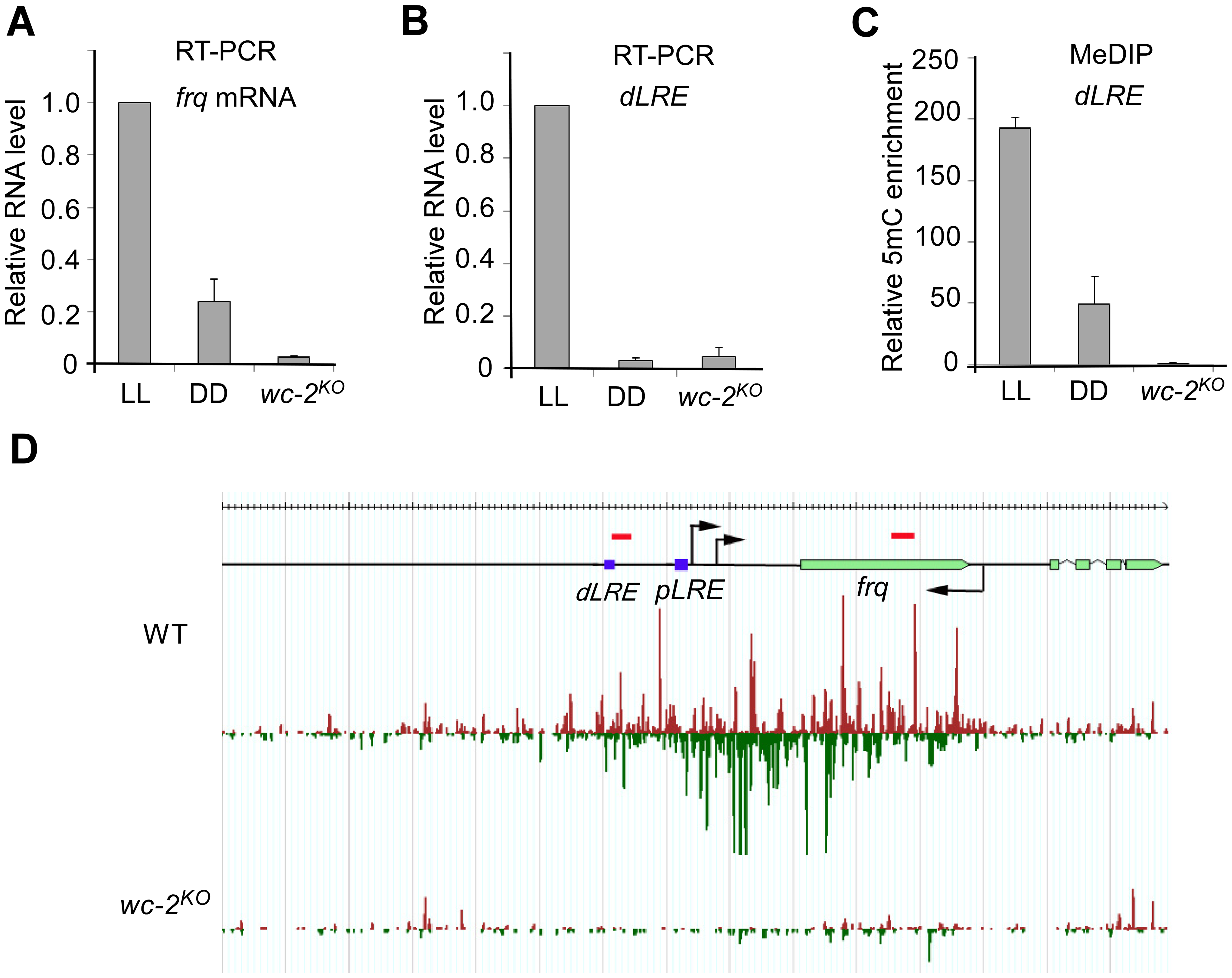 DNA methylation and disiRNA in <i>disi-47</i> locus requires transcription.