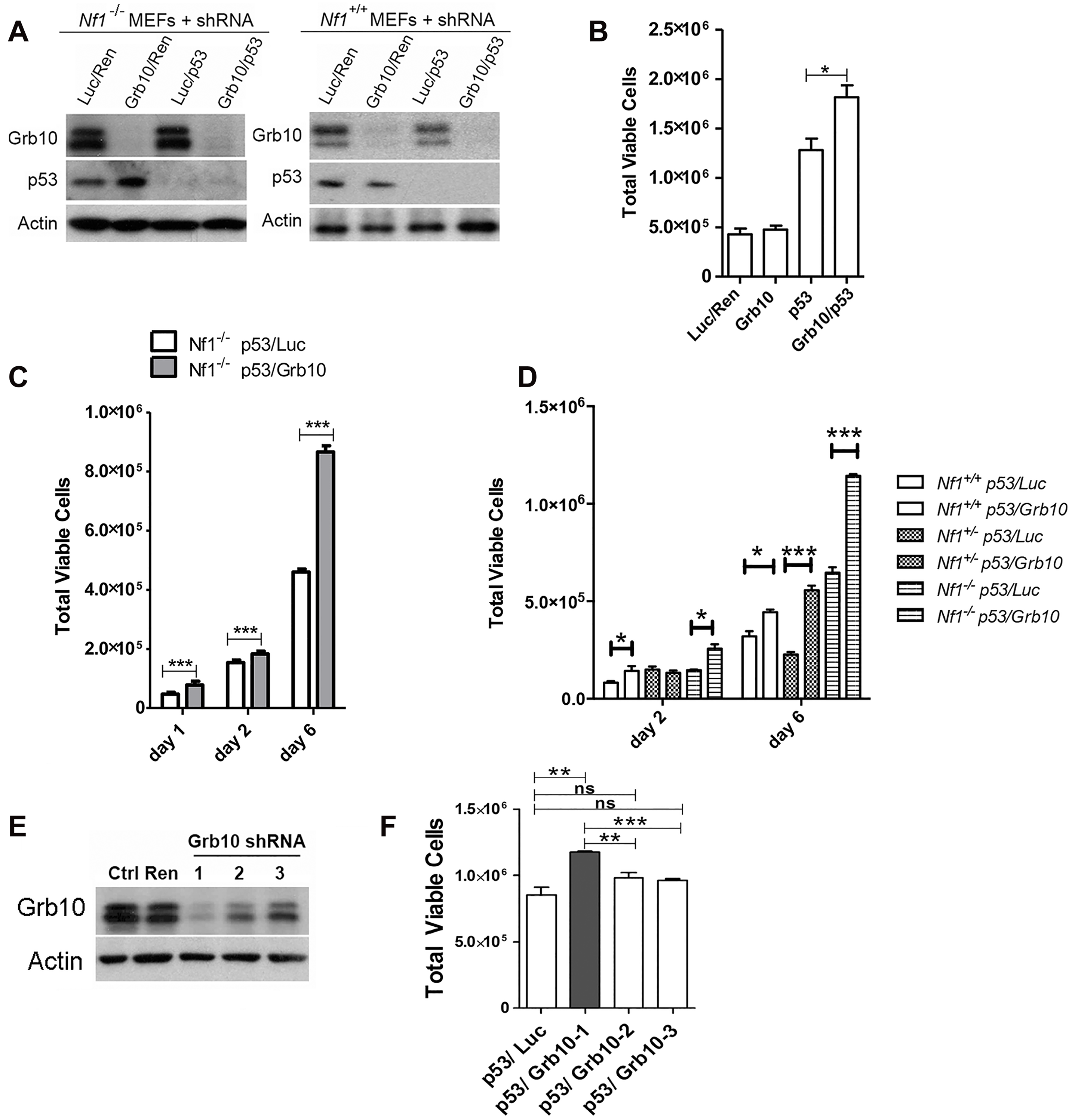 <i>Grb10</i> knockdown in MEFs increases cell proliferation.