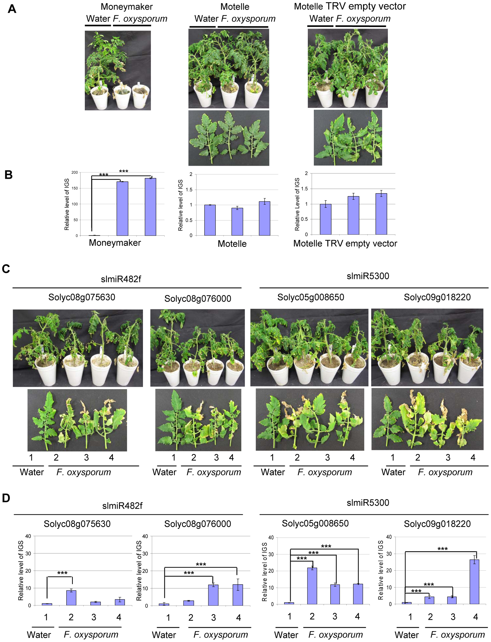 Targets of slmiR482f and slmiR5300 are required for <i>F. oxysporum</i> defense in tomato.
