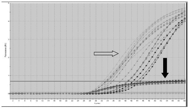 Ukázka výstupu Real Time PCR. Volná fetální DNA je posuzovaná v jednotlivých velikostních frakcích. Šedá šipka označuje záchyt fetální DNA (SRY), kdy plod je mužského pohlaví, a černá vnitřní kontrolu PCR
