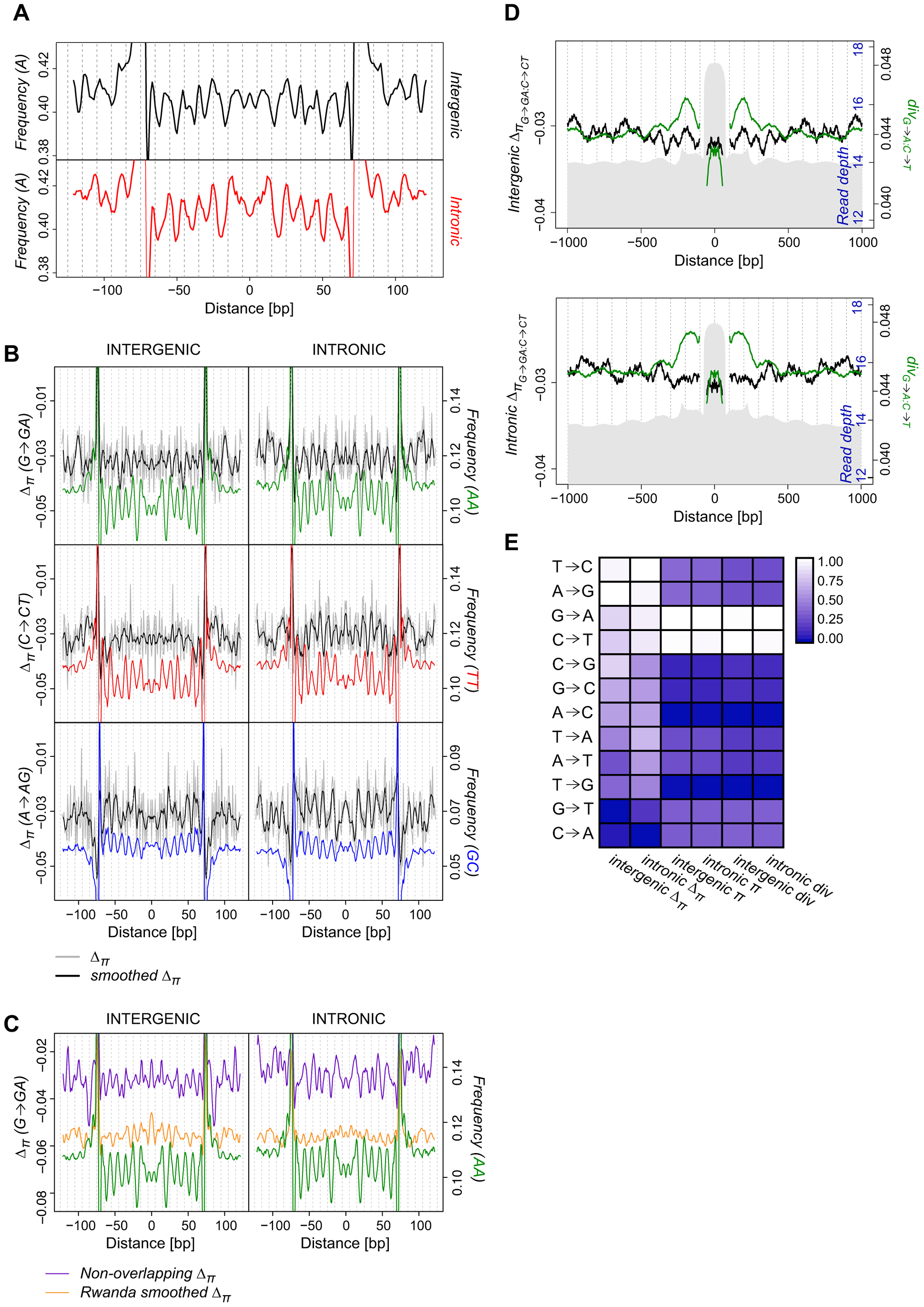 Periodicity in average SNP frequencies aligns with nucleosomal divergence and dinucleotide sequence preferences.