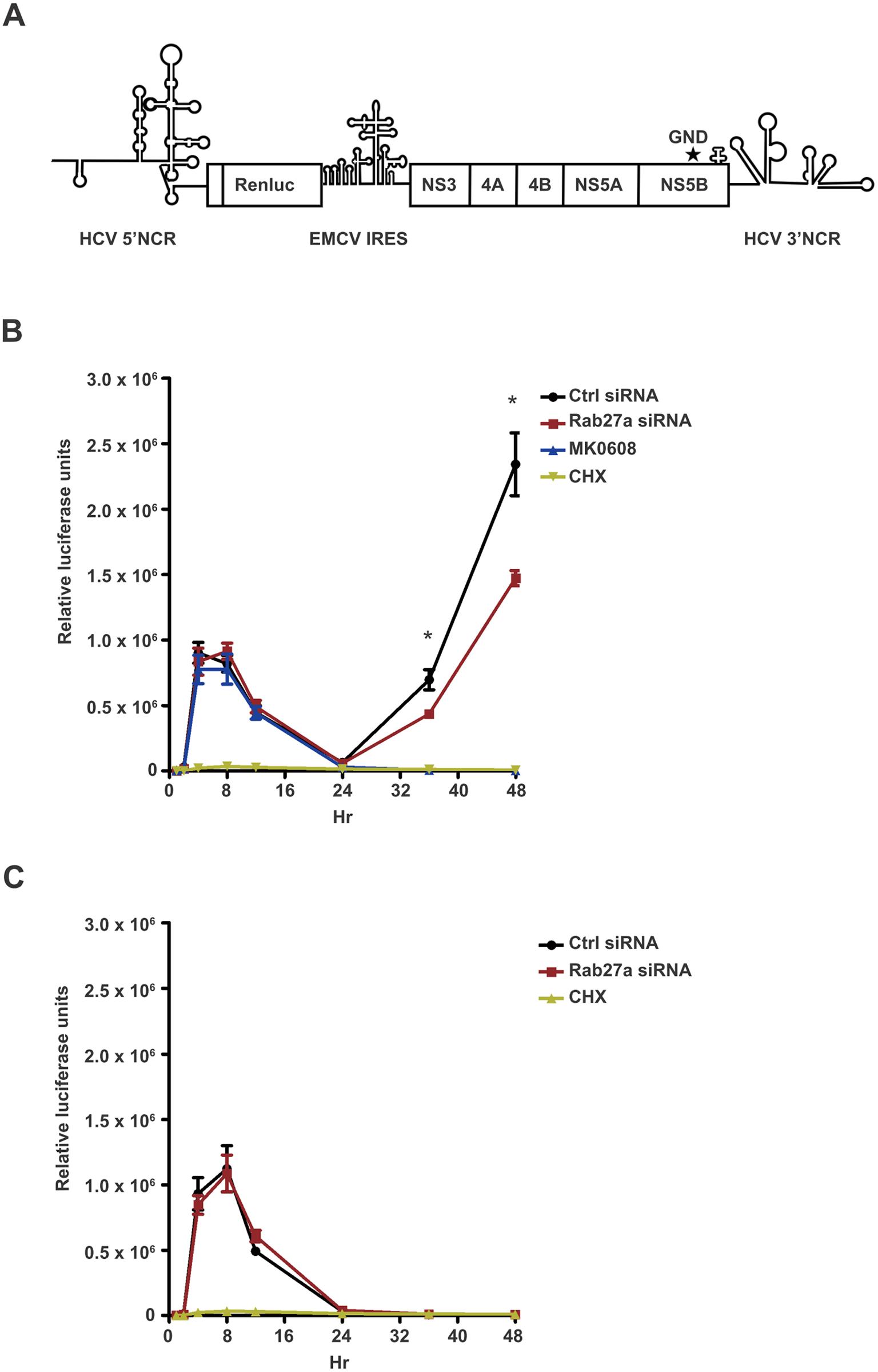 Effect of Rab27a depletion on HCV gene expression.