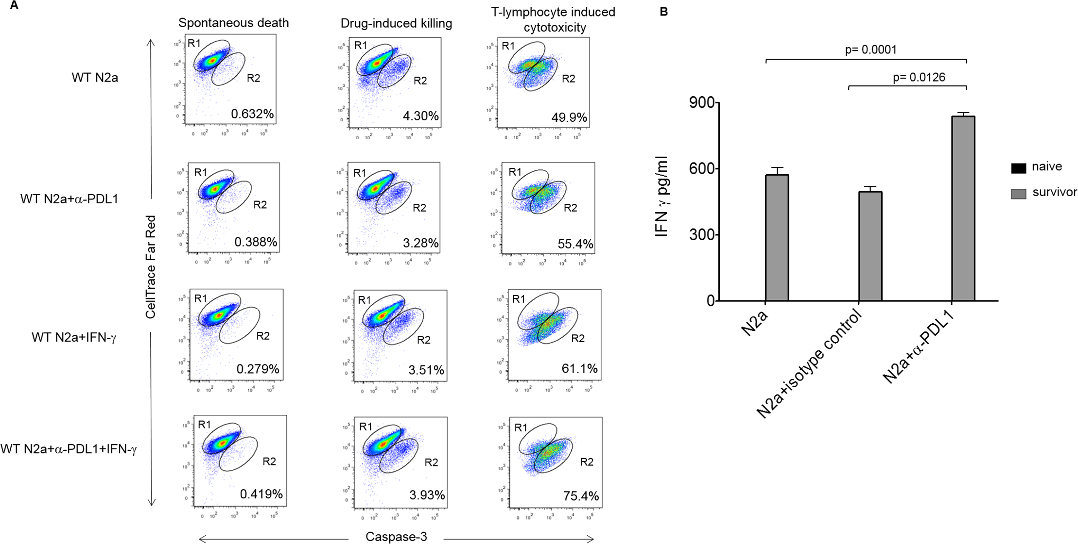 Enhanced effector function of tumor-infiltrating lymphocytes (TILs) and memory response in survivors with inhibition of programmed cell death-ligand 1 (PD-L1).