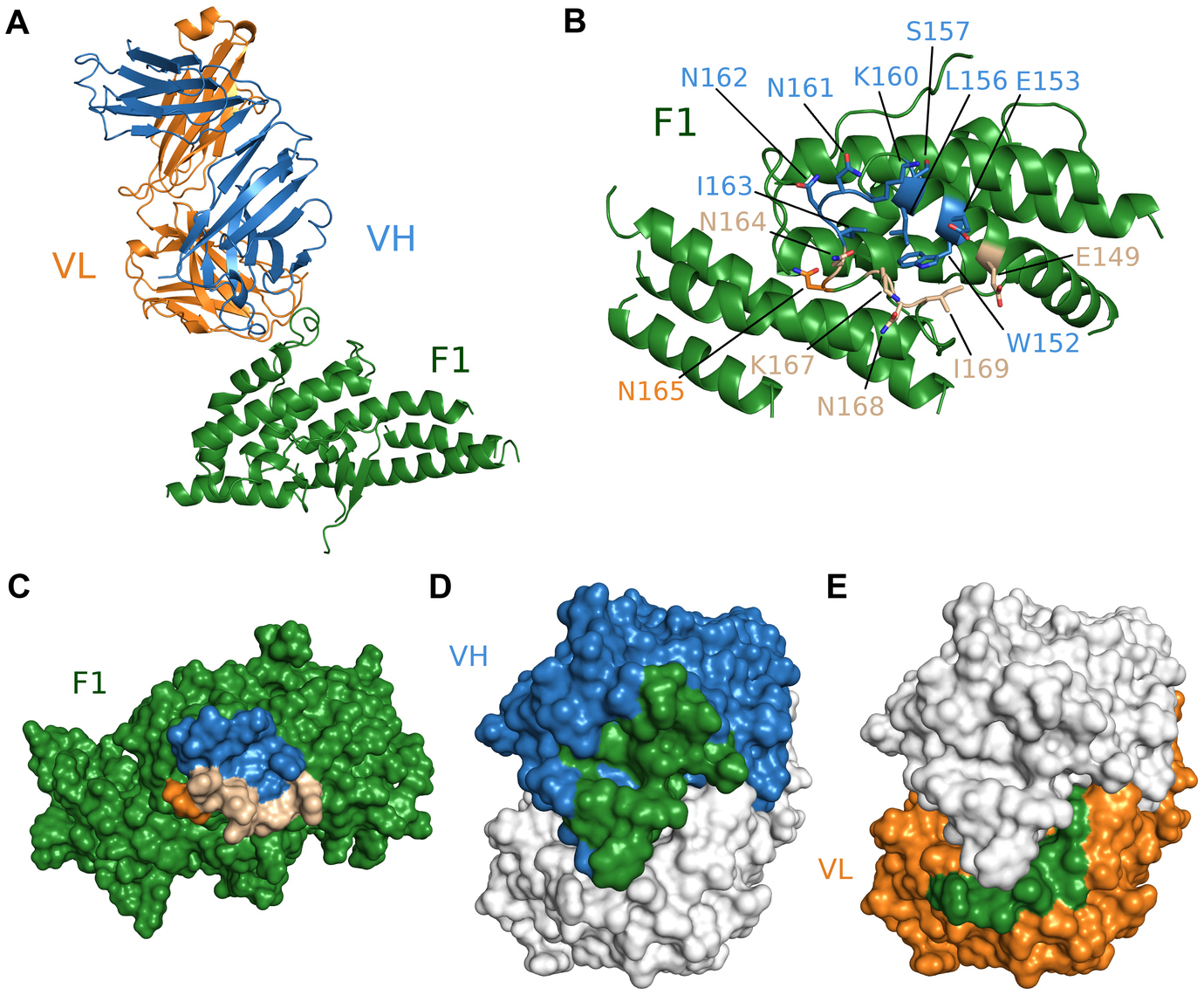 Crystal structure of F1/R218 Fab complex.