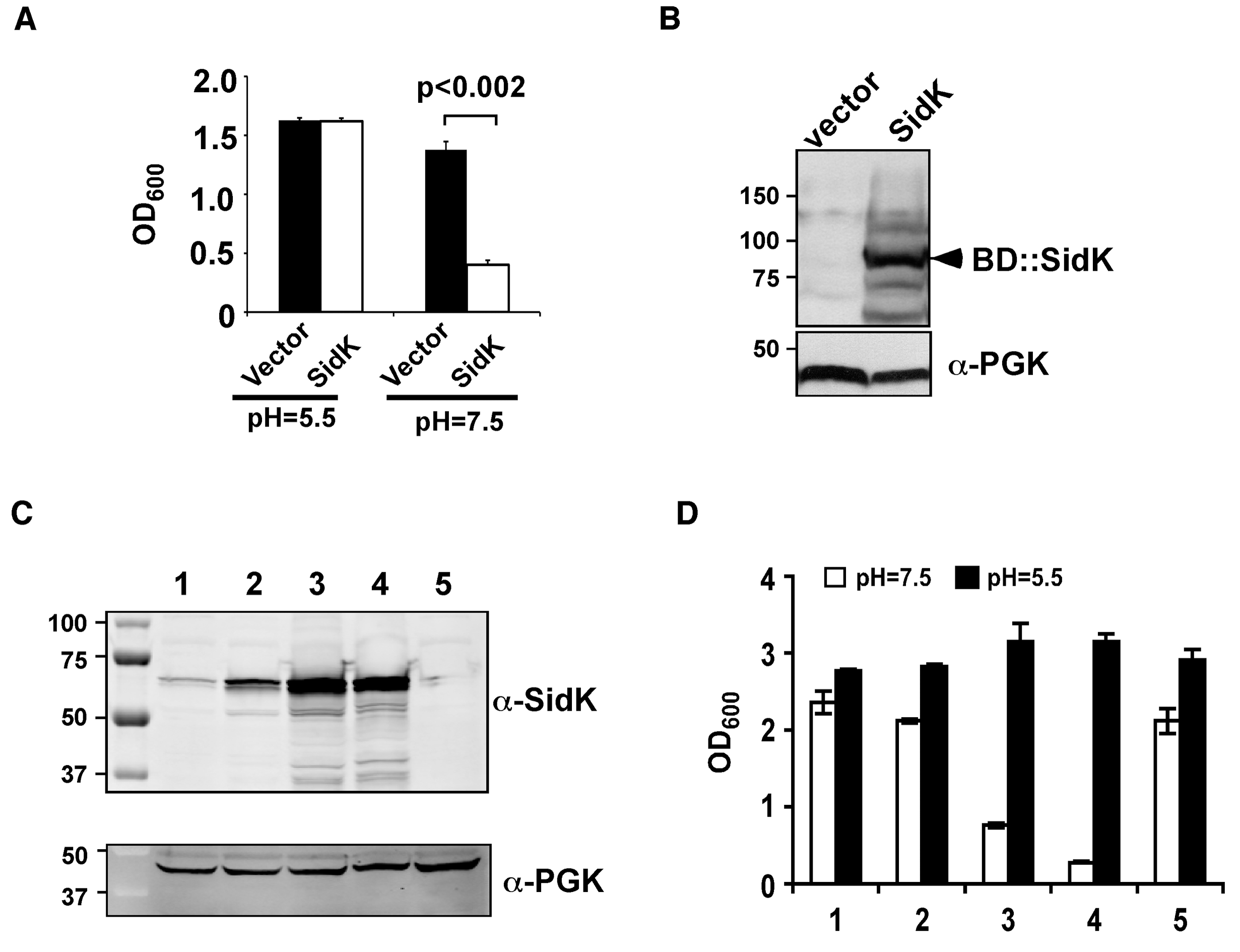 Identification of <i>L. pneumophila</i> protein that inhibits yeast growth in neutral pH medium.