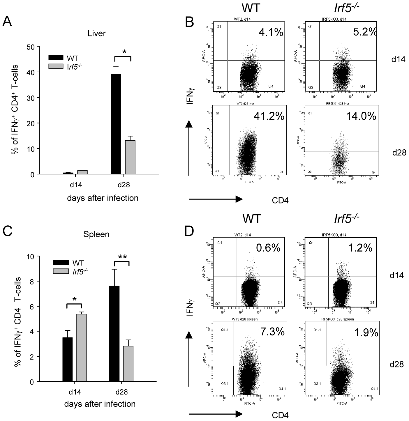 <i>Irf5</i><sup>-/-</sup> mice have a defective Th1 response.