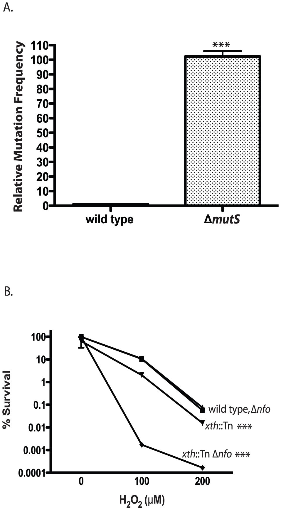 Phenotypes of <i>V. cholerae</i> DNA repair mutants.