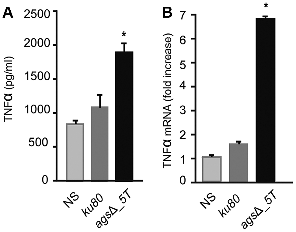 TNFα production or expression by macrophages (isolated from uninfected immunocompetent mice) upon interaction with resting conidia of parental (<i>ku80</i>) and <i>ags</i>Δ_<i>5T</i> strains or <i>ags</i>Δ_<i>5T</i> conidial NaCl extract (3.2 µg proteins) respectively.