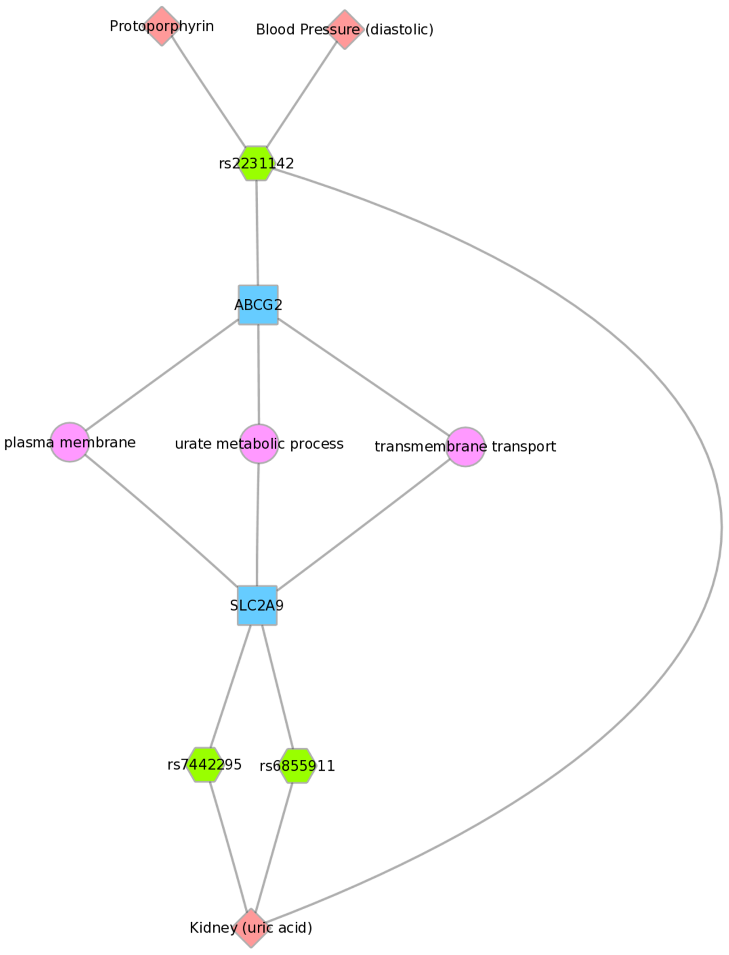 Using PheWAS results, Biofilter, and Cytoscape to explore gene-gene connections with GO biological processes.