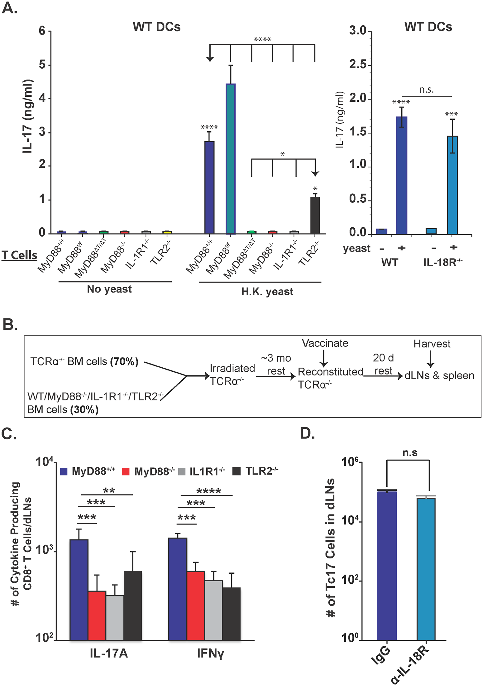 Role of IL-1R, IL-18R and TLR2 on Tc17 cell responses.