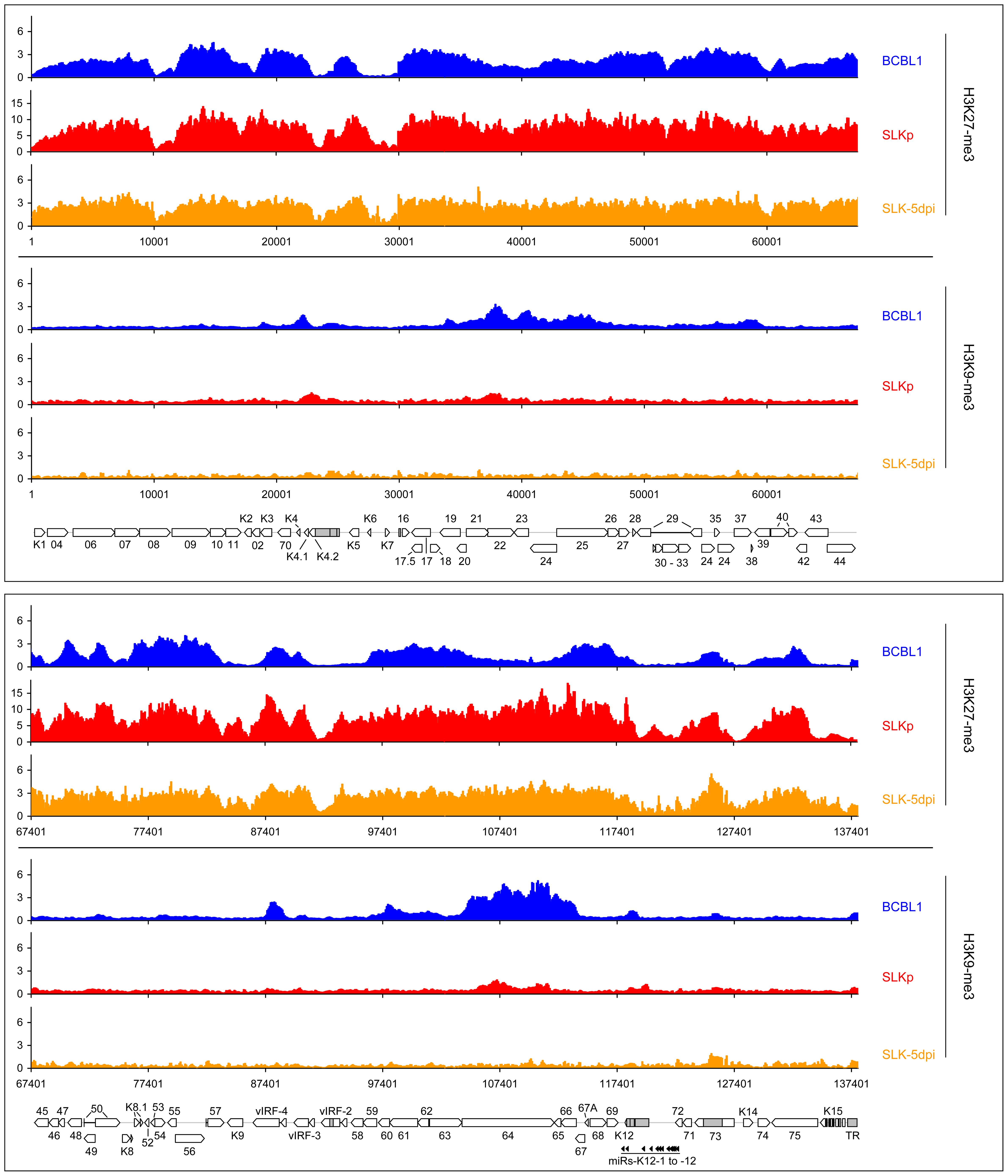 Global patterns of H3K27 and H3K9 tri-methylation on latent KSHV genomes.