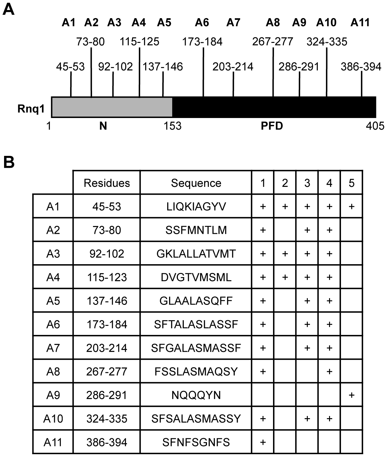 Consensus amyloidogenic regions of Rnq1 identified by prediction algorithms.