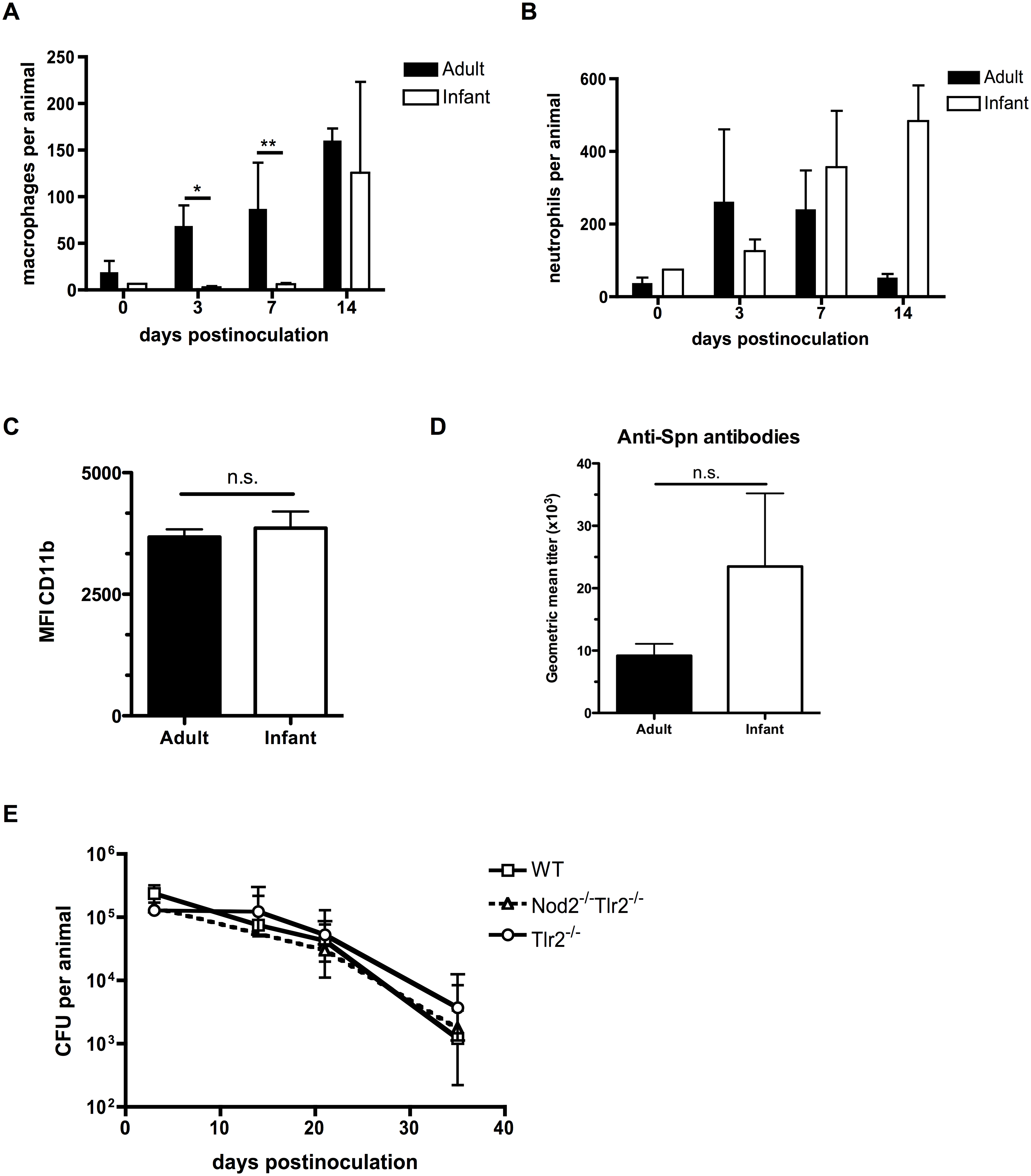 Infant mice are impaired in macrophage recruitment during colonization.