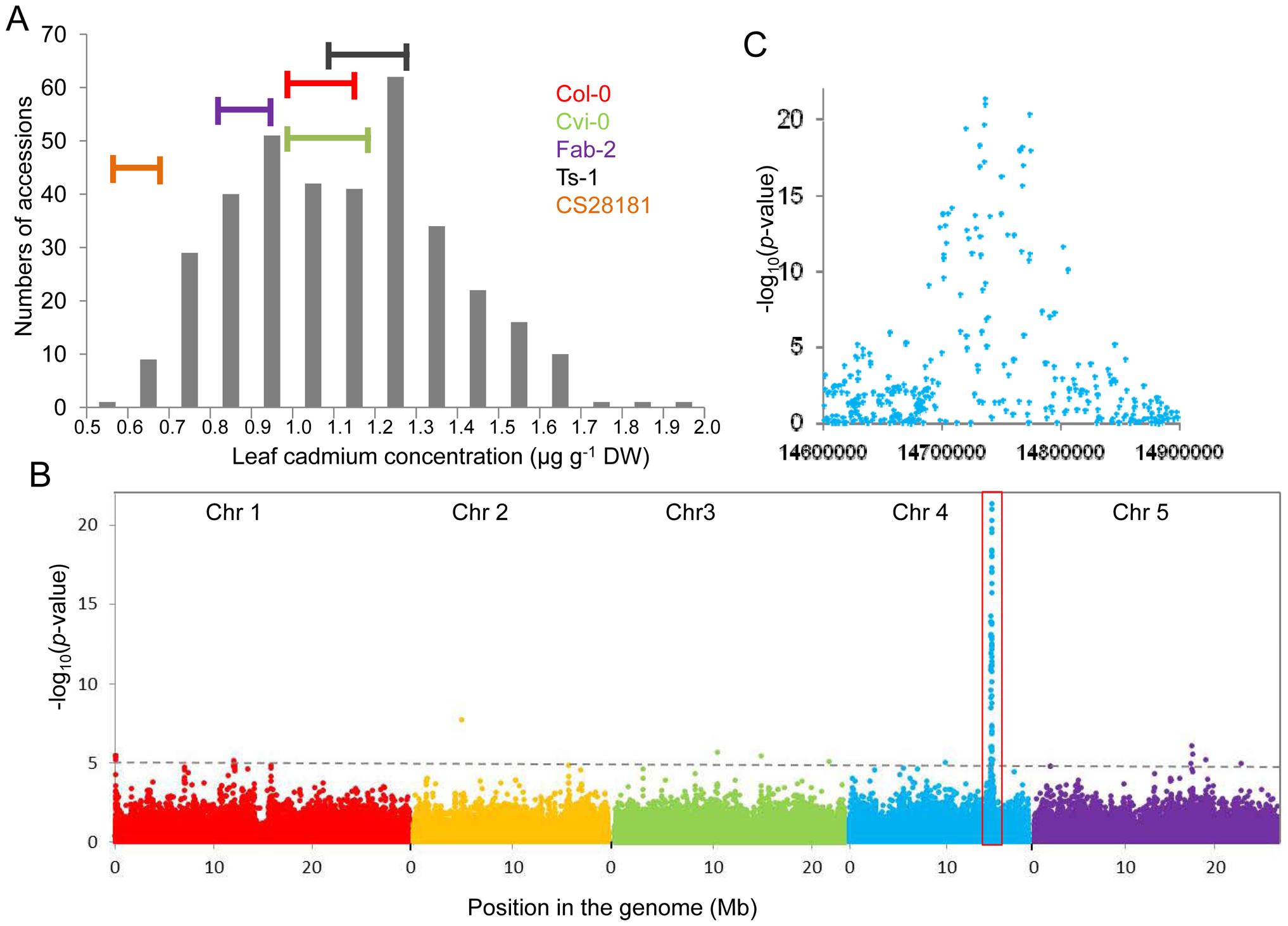 Genome-wide association analysis of leaf Cd accumulation in a worldwide collection of <i>A. thaliana</i> accession grown in a common garden.