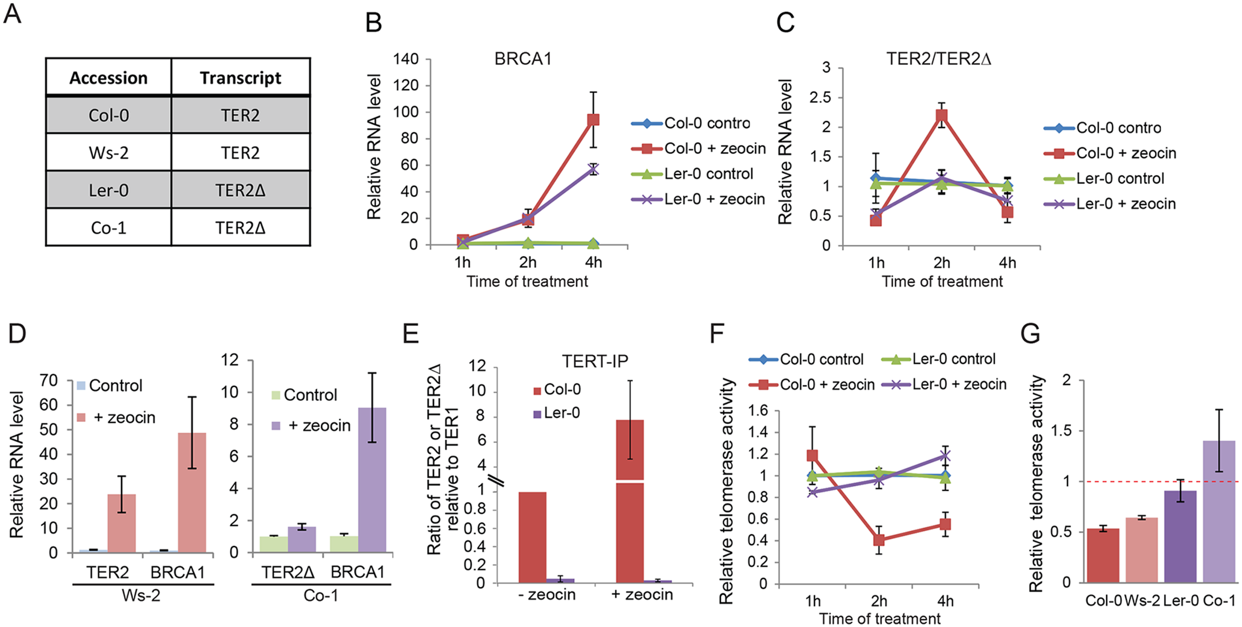 DSB-mediated RNA induction and telomerase inhibition are associated with DRE.