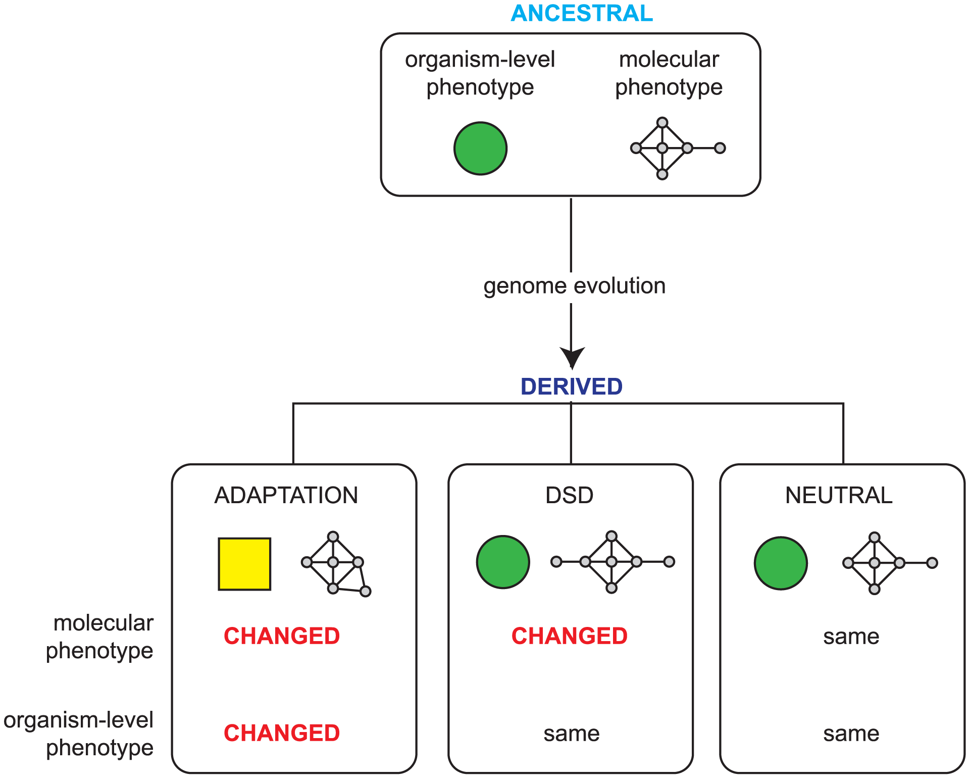 Possible outcomes of genome evolution.