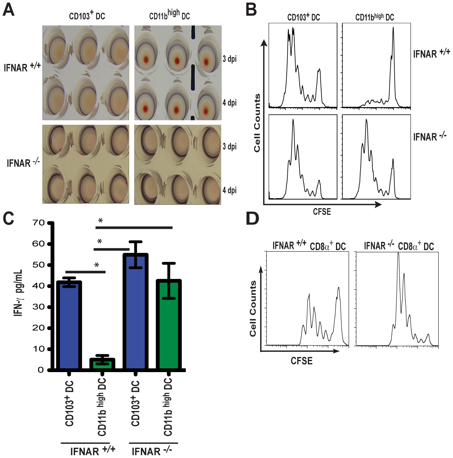 IFNAR signaling determines class-I restricted antigen presentation by CD11b <sup>high</sup> DCs during influenza virus infection.